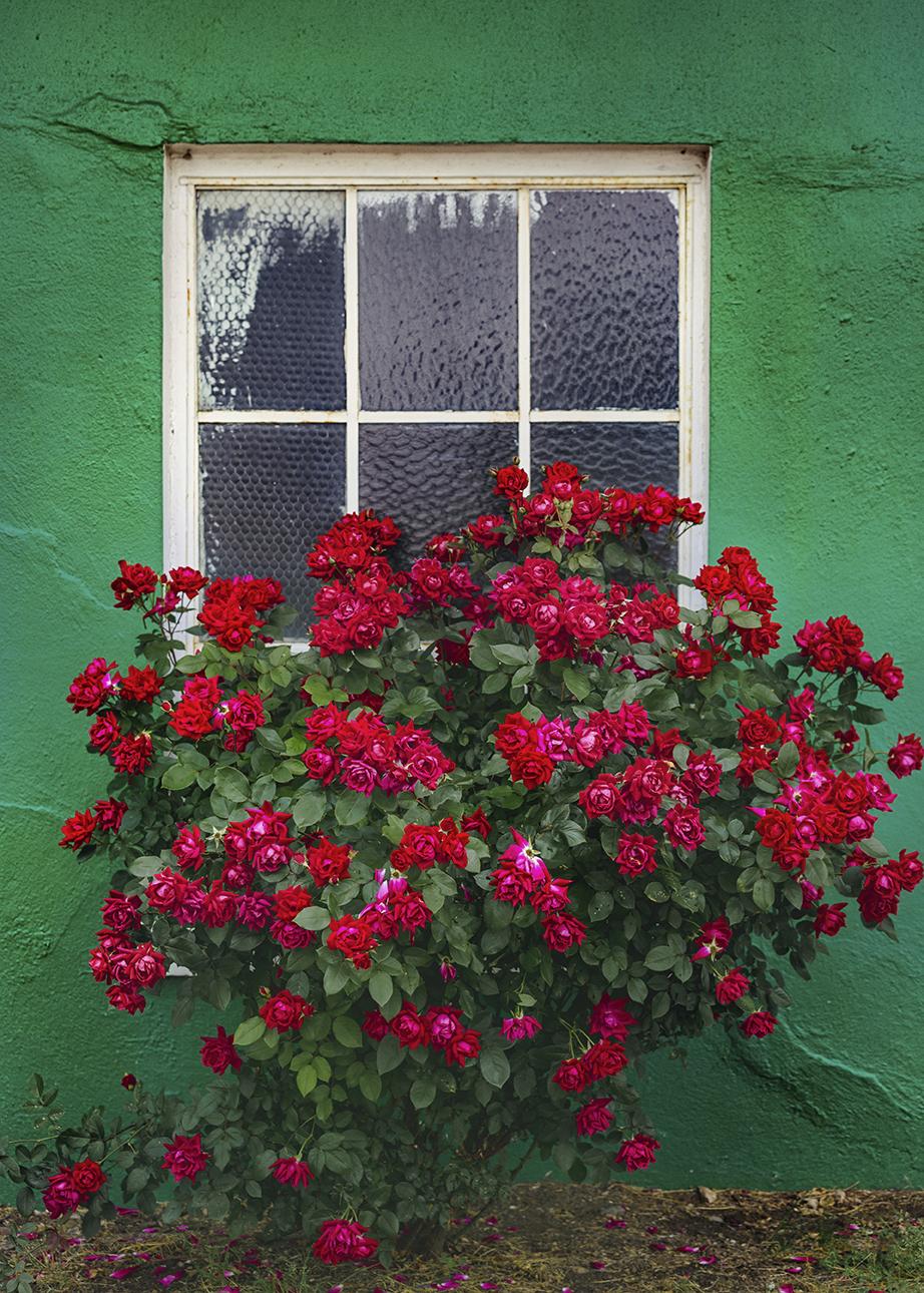Roses_KenmoreCleaners_0013.jpg