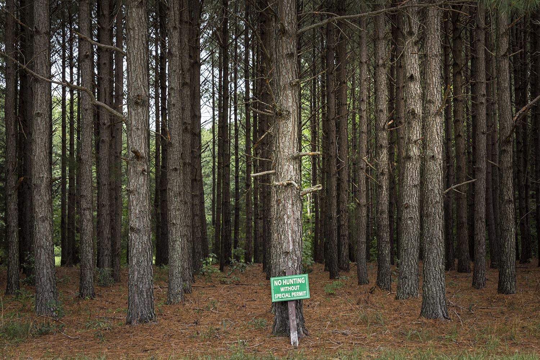 TreeFarm_Louisa_0017.jpg