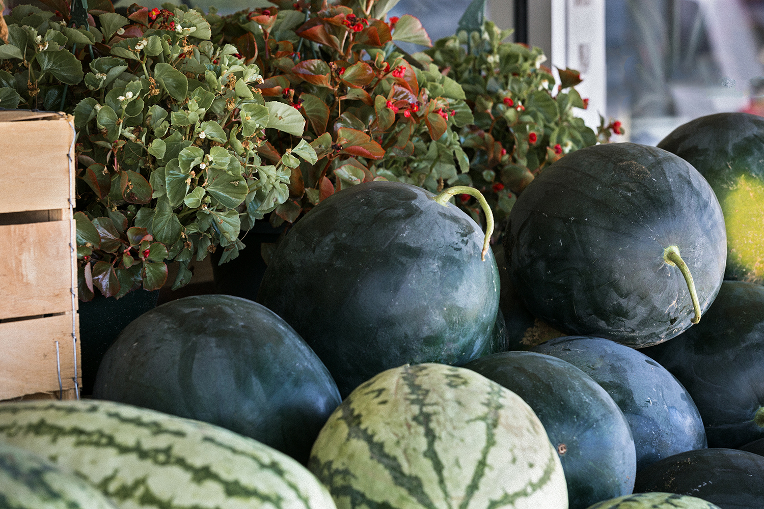 Doswell_Store_Watermelons_0004.jpg