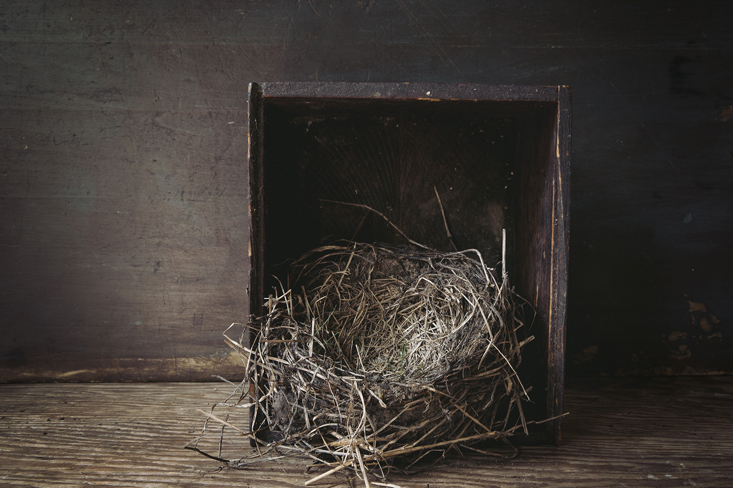 BirdNest_in_Box_0016.jpg
