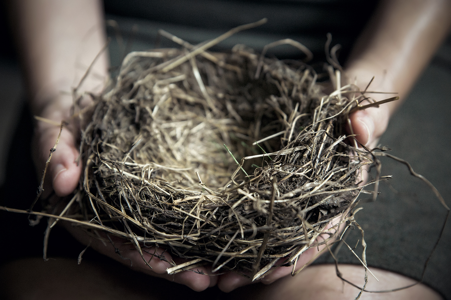 Birds_Nest_in_Hands_0006.jpg