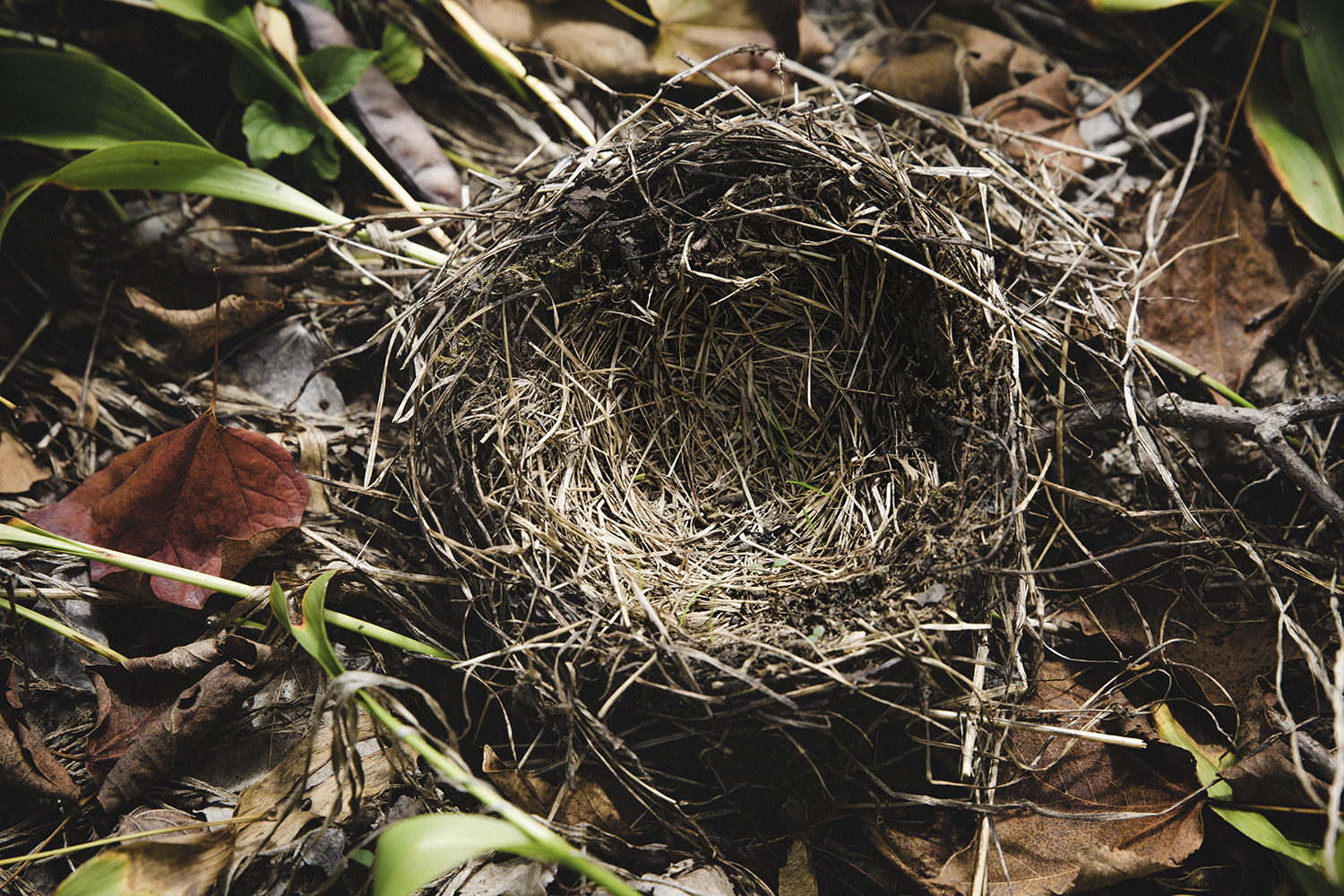 Birds_Nests_as_found_0009.jpg