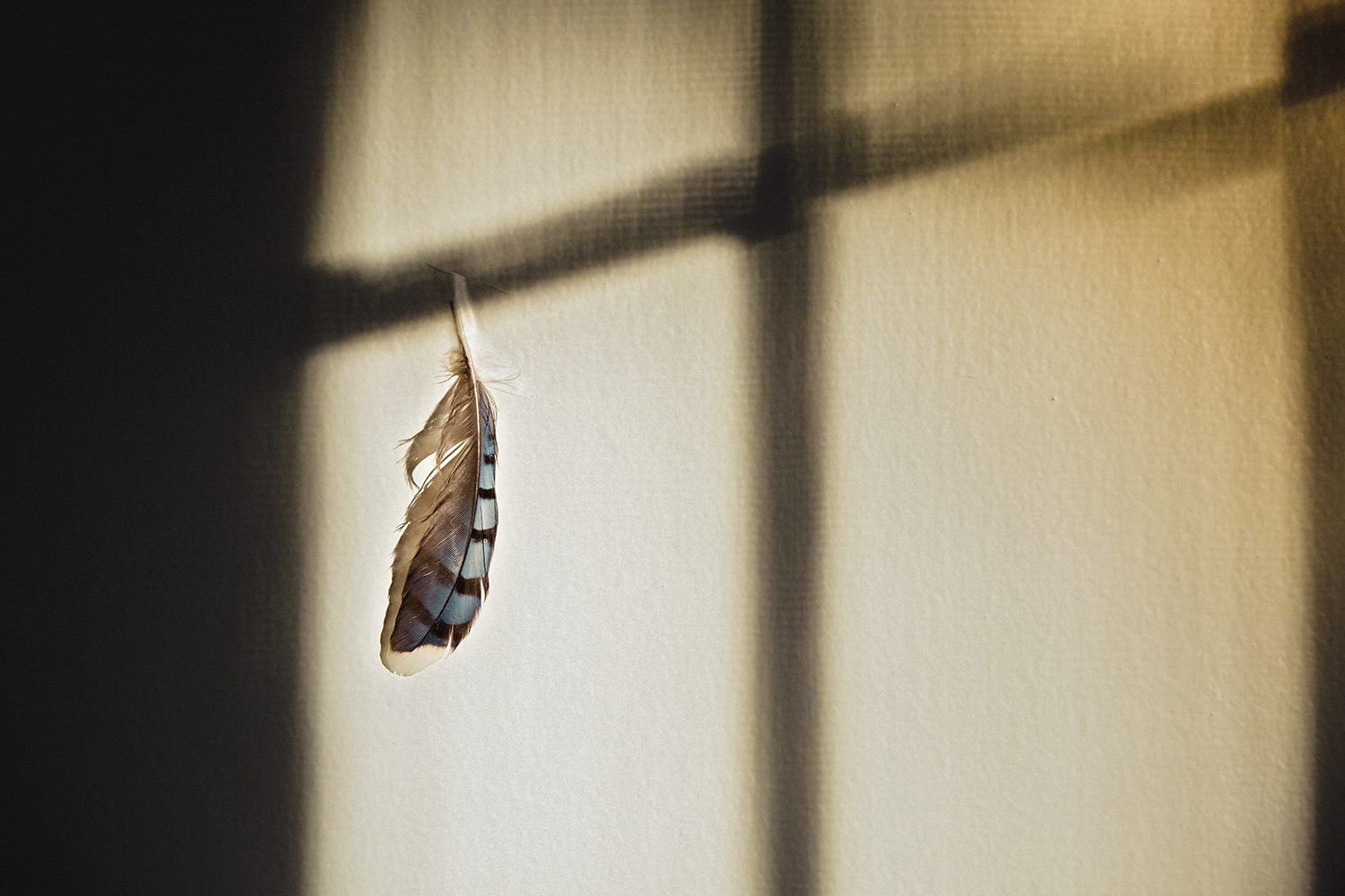 Feather_Morning_Light_0008.jpg