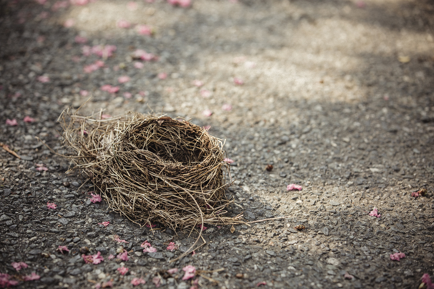 Birds_Nest_Roadside_0068_V2.jpg