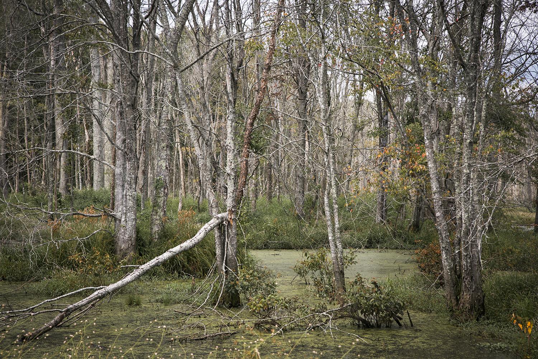 Beaver_Marsh_Edgefield_Academy_Road_0023.jpg