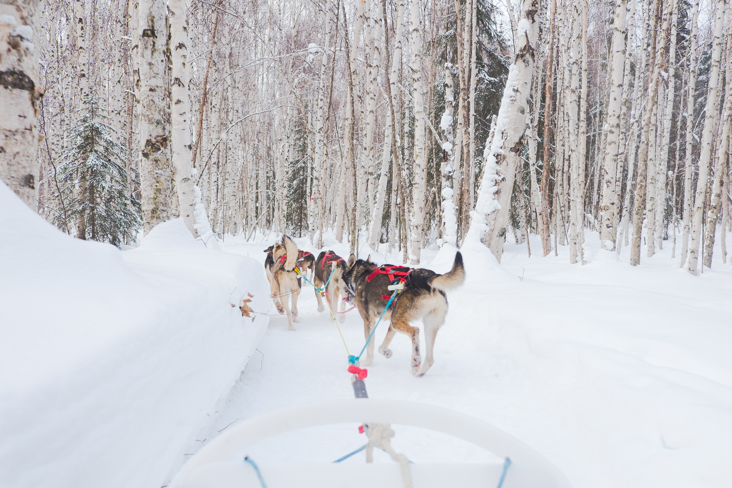 Alaska-Adventure5831.jpg