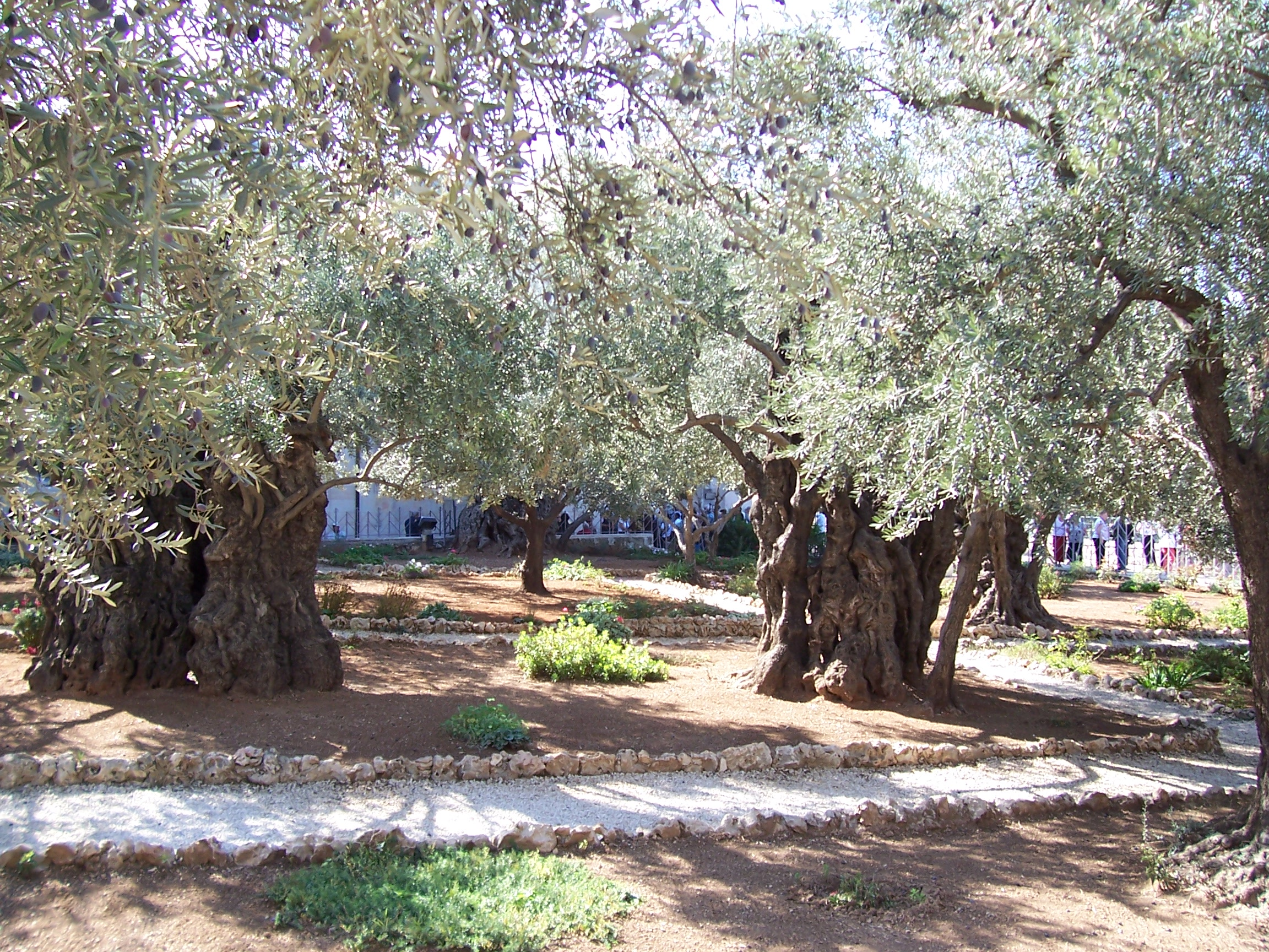 EDH_0517 - Gethsemane.JPG
