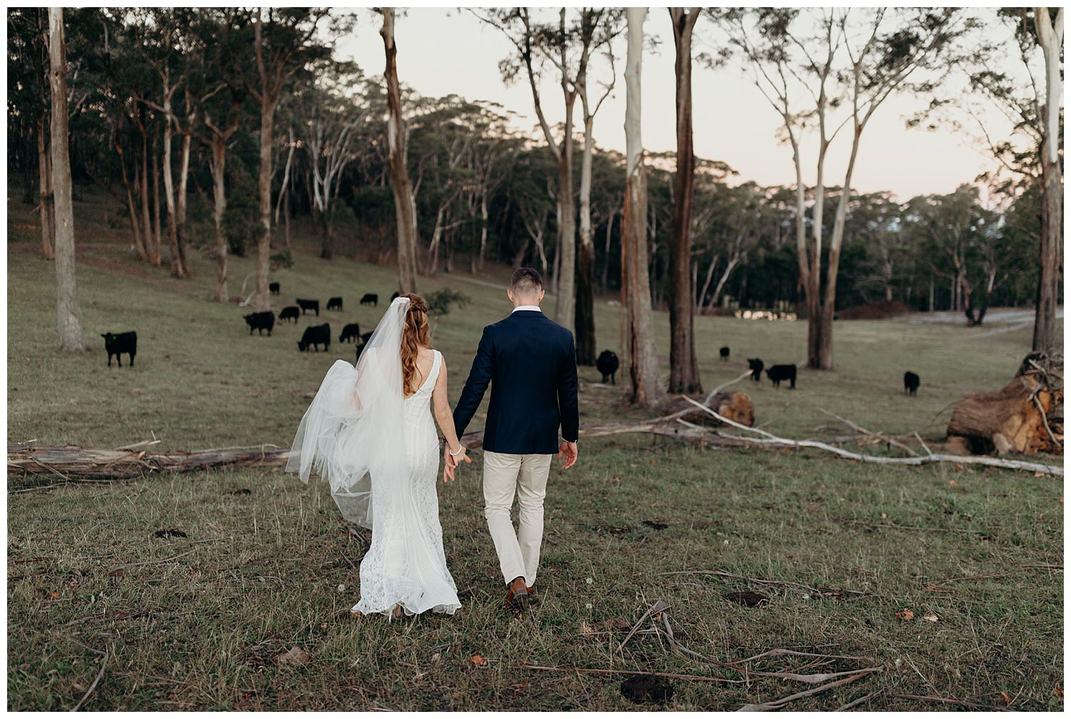 Bowral Southern Highlands Autumn Wedding - Centennial Vineyards cow pasture