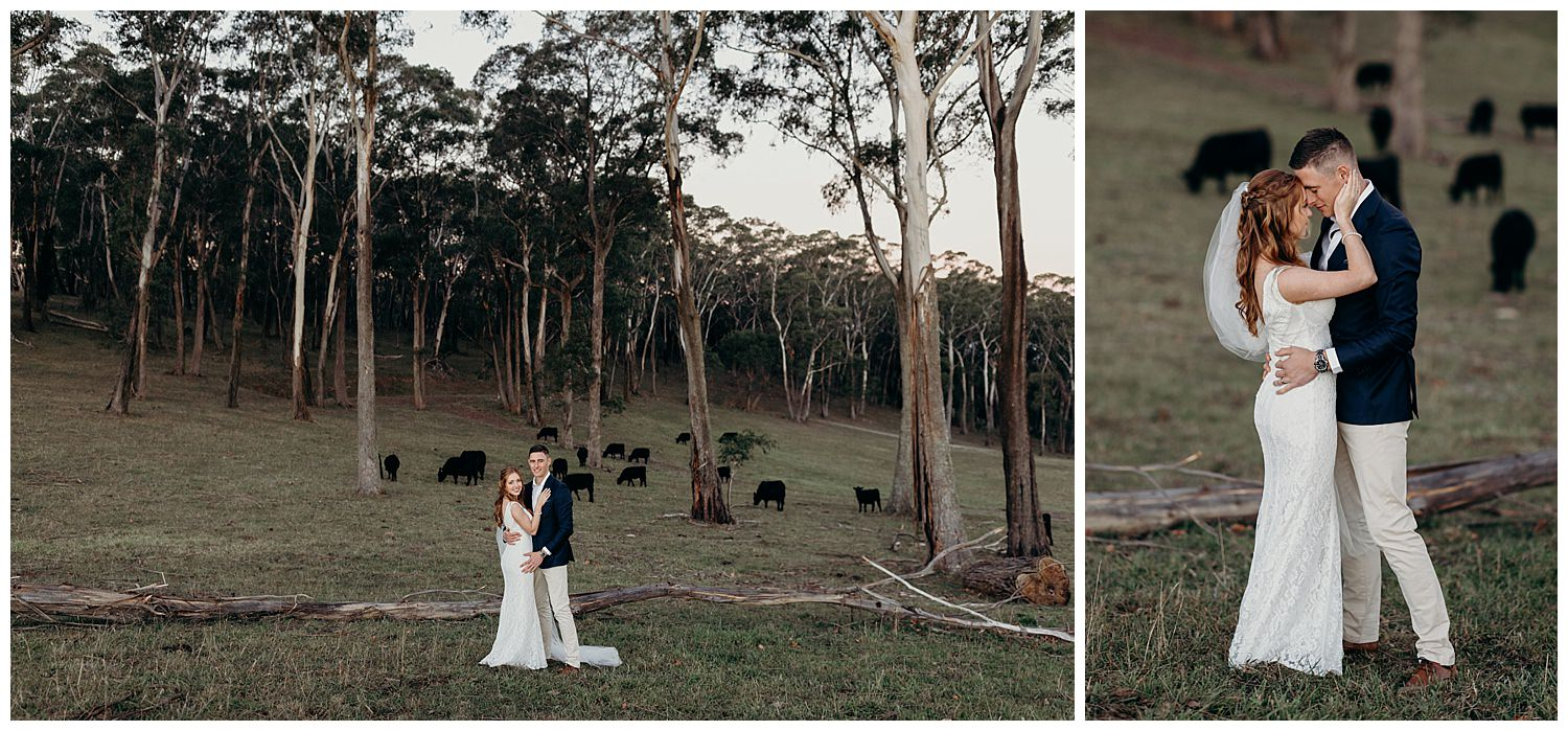 Bowral Southern Highlands Autumn Wedding - Centennial Vineyards bridal portrait cows