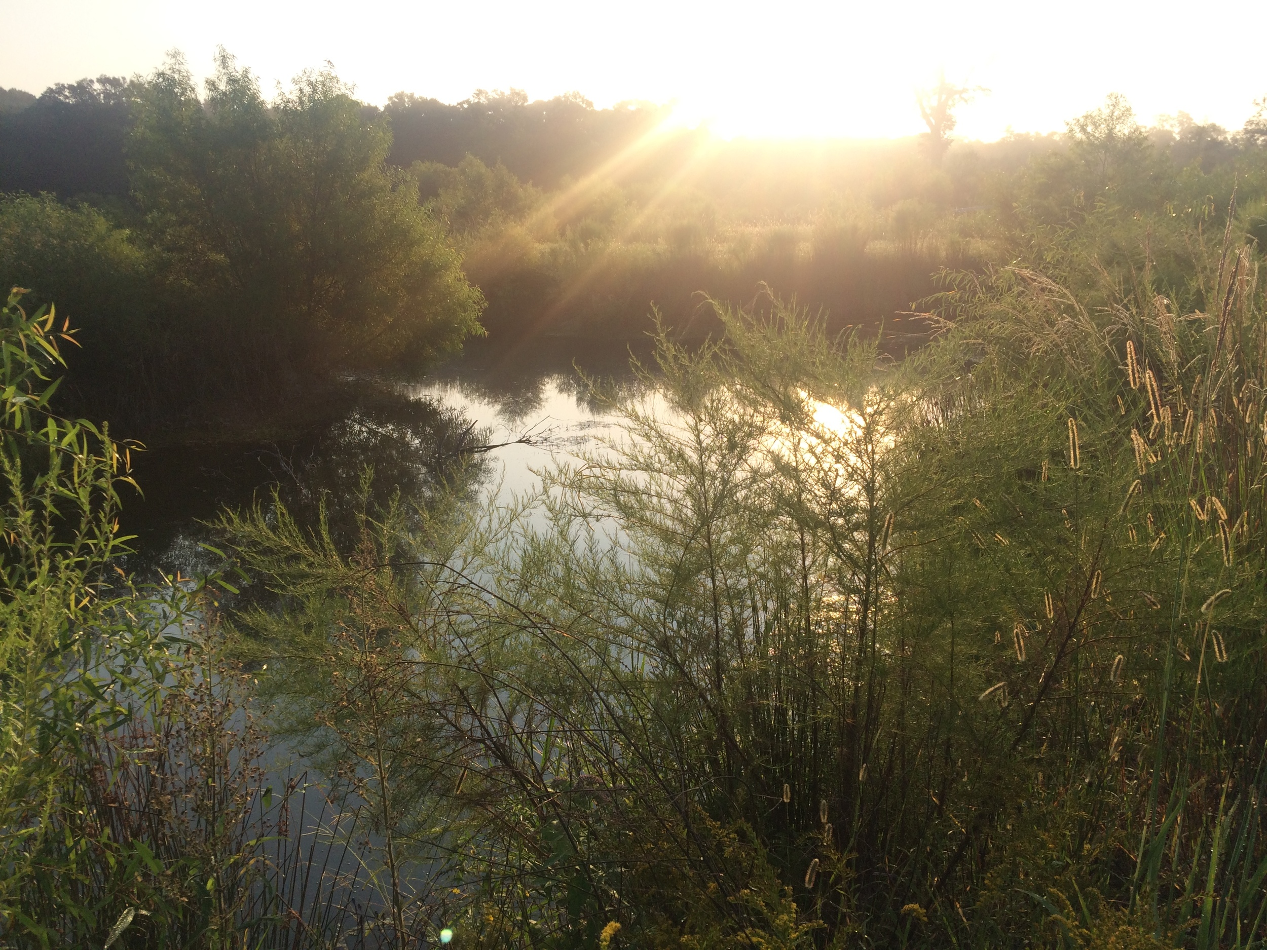 sunset pond.jpeg