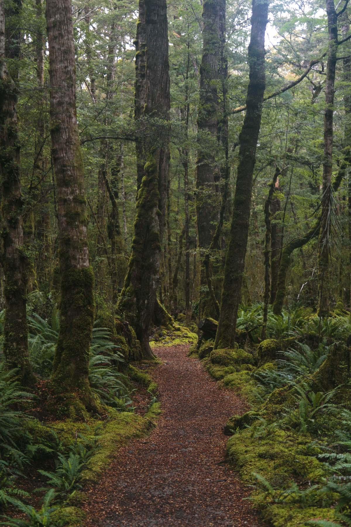 Lots of lush, fantastical goblin forests on the Kepler Track