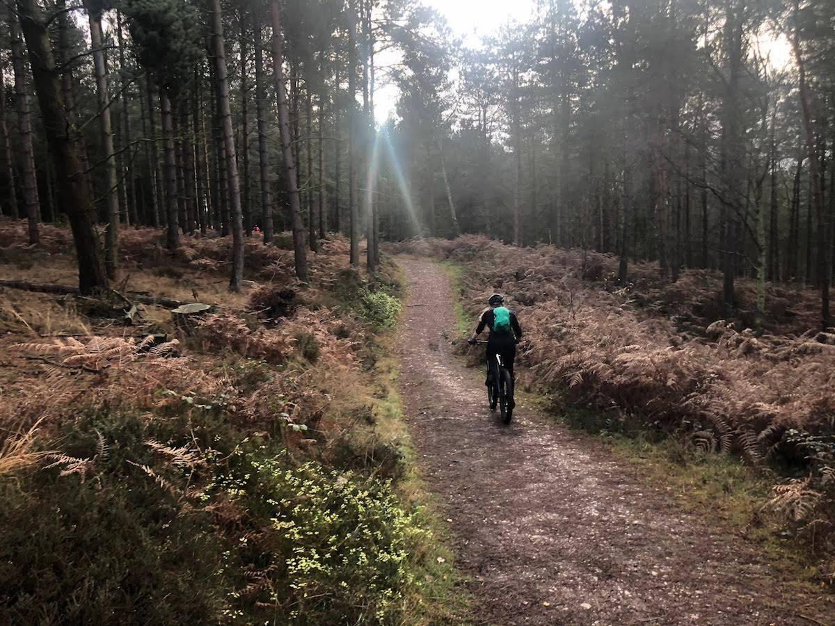 Danielle Lovett - Mountain biking through a forest