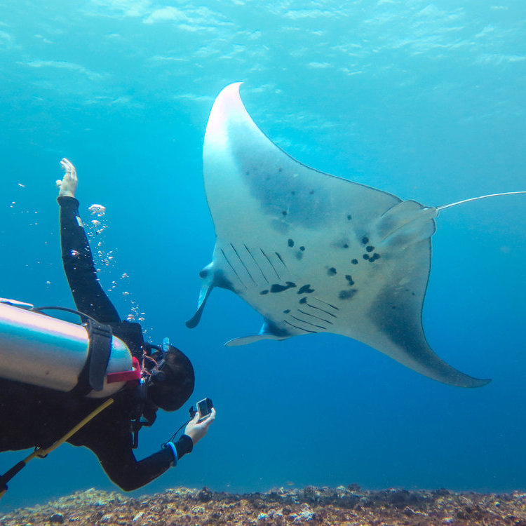 Charlie Elliott | She Went Wild Diving Ambassador