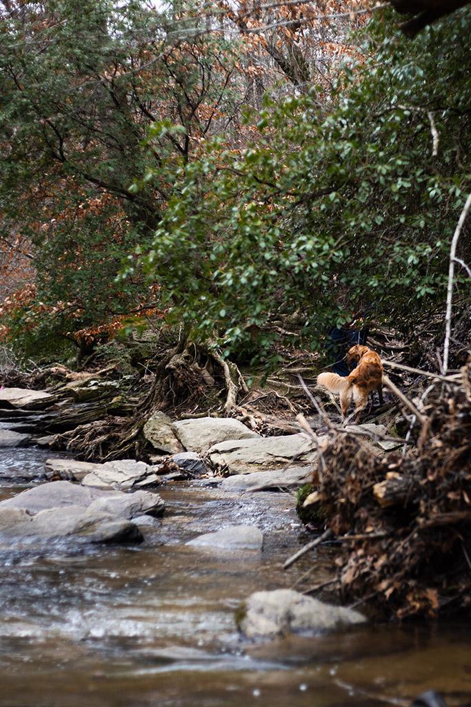 Sope_Creek_in_Marietta_Photoshoot_with_Atlanta_Engagement_Photographer_Chanel_G_Photography_8