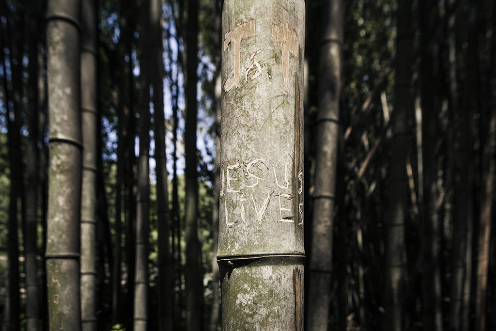 Exploring_bamboo_forest_in_East_Palisades_Trail_by_Atlant_photographer_Chanel_French_6