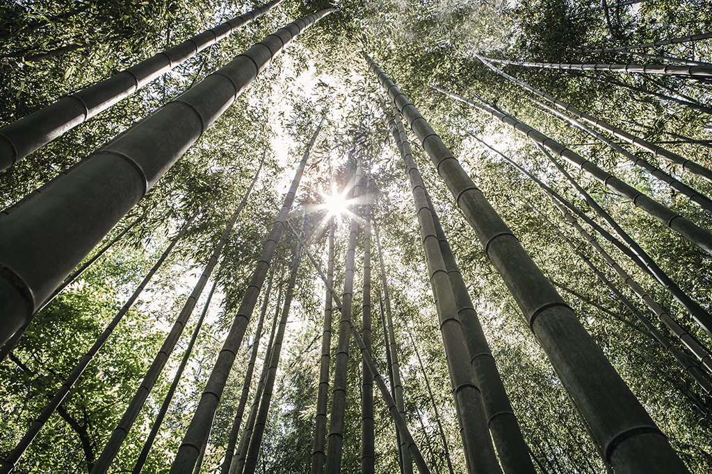 Exploring_bamboo_forest_in_East_Palisades_Trail_by_Atlant_photographer_Chanel_French_9