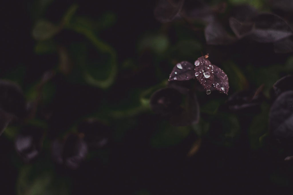 Photography-inspiration-raindrops-on-purple-leaves-by-Atlanta-photographer-Chanel-French