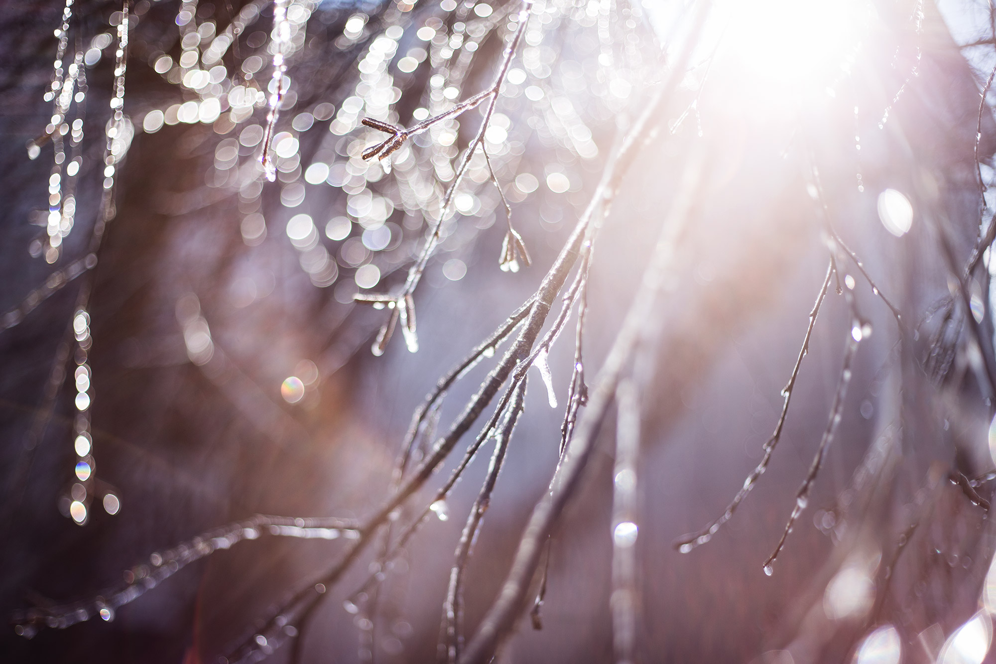 Photography-inspiration-ice-tree-branches-by-Atlanta-photographer-Chanel-French