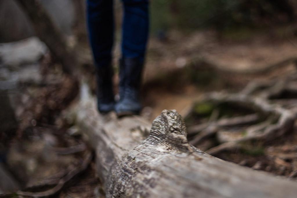 Woman-walking-on-fallen-tree-branch-Sope-Creek-by-Atlanta-photographer-Chanel-French-2.jpg