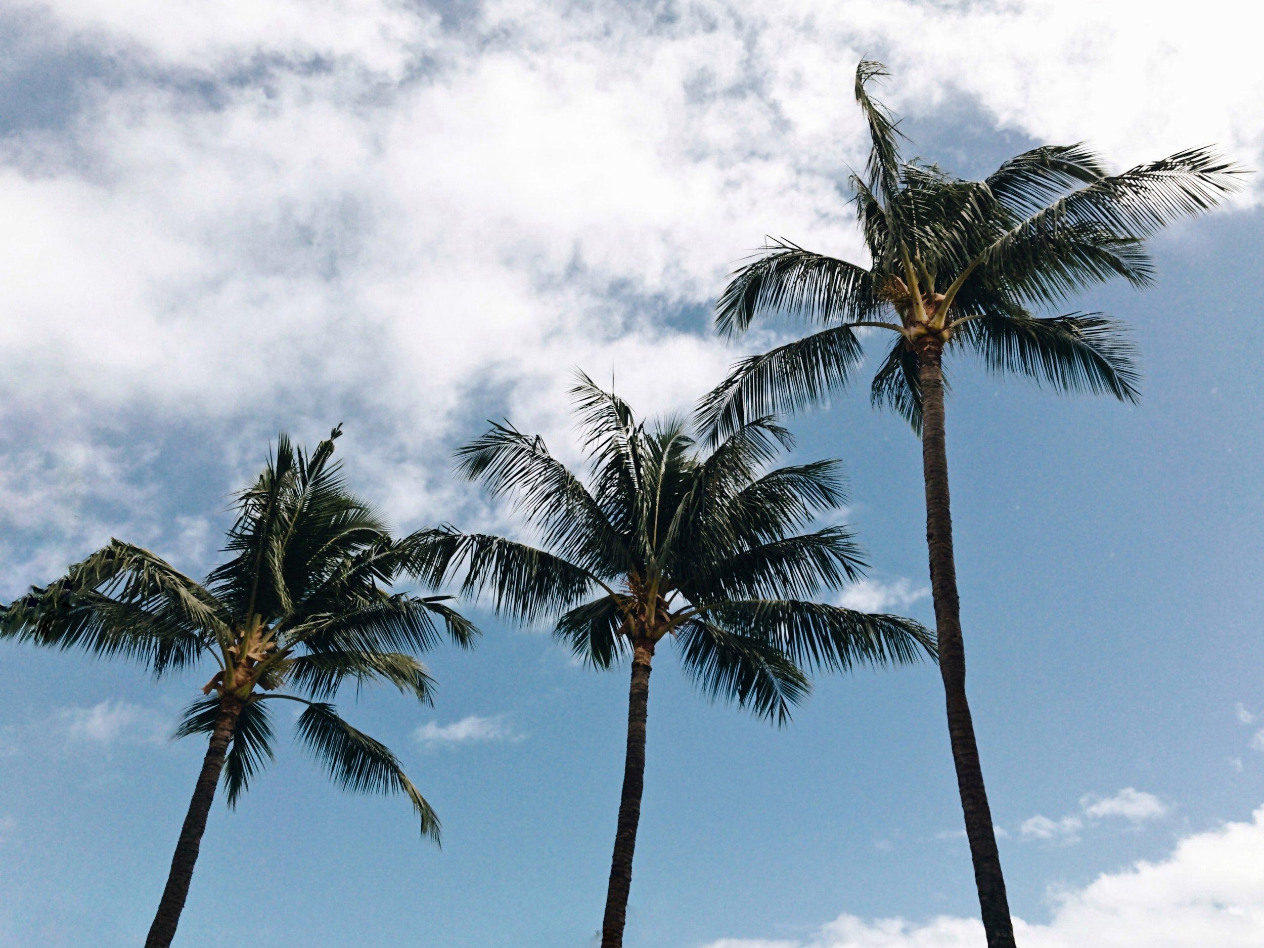Hawaii-Lahaina-palm-trees-by-Atlanta-photographer-Chanel-French-10