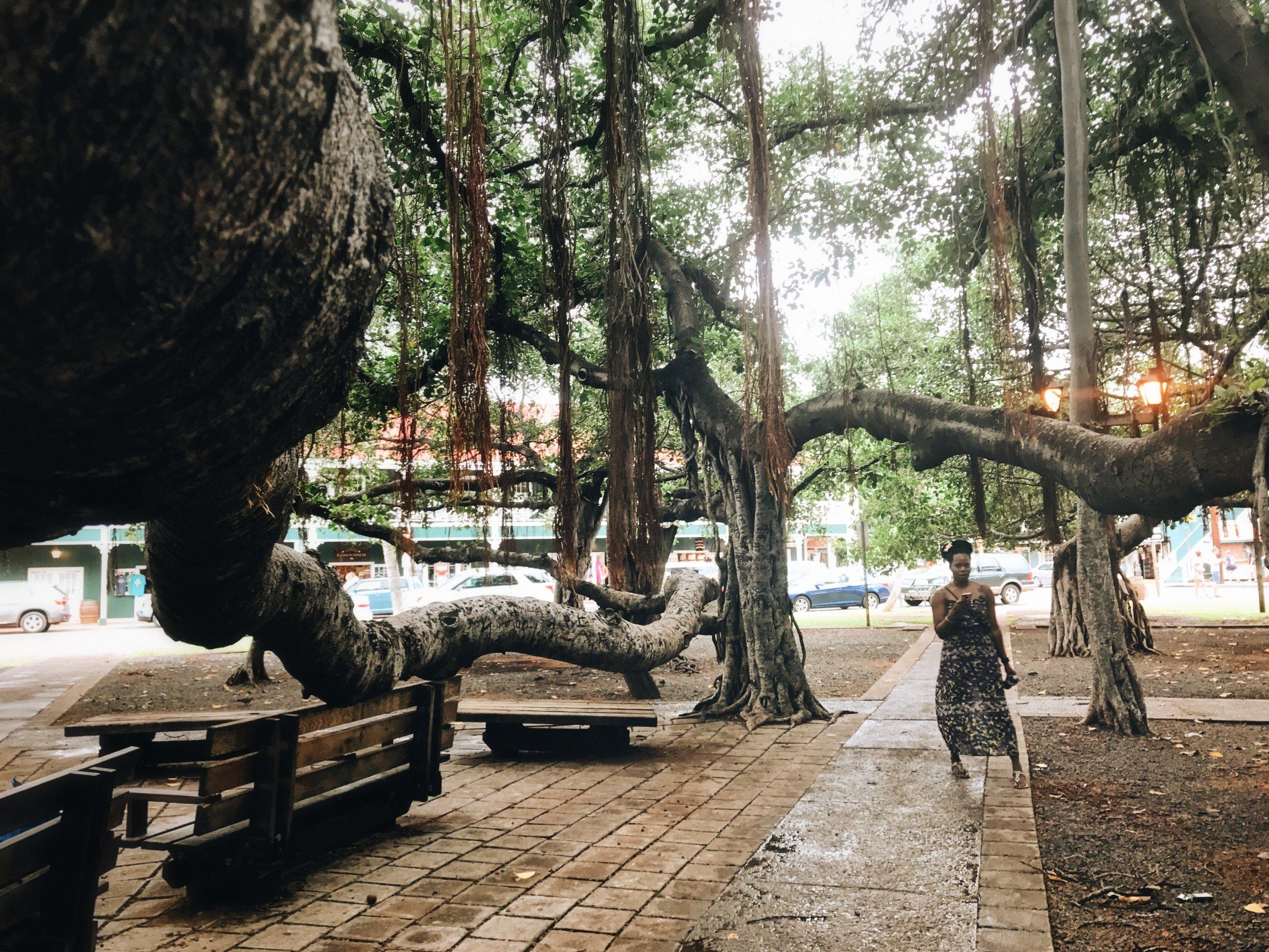 Hawaii-Lahaina-largest-banyan-tree-by-Atlanta-photographer-Chanel-French-22