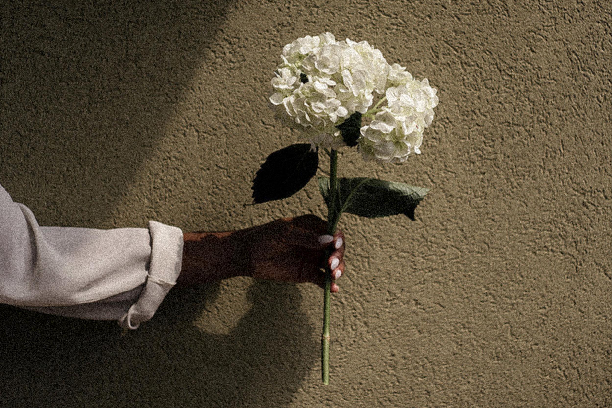 Black-woman-hand-holding-white-hydrangea-flower-by-Atlanta-photographer-Chanel-French.jpg