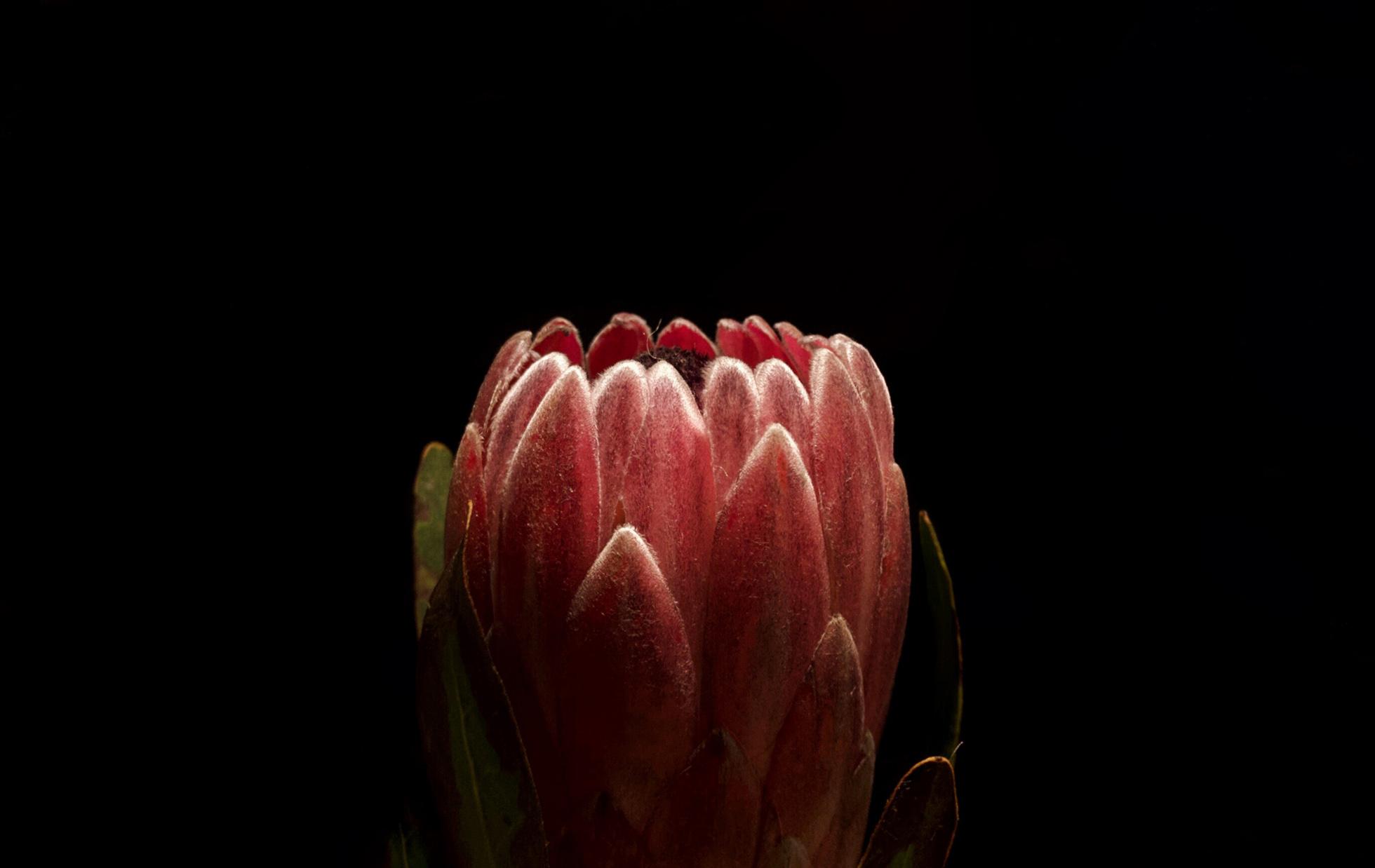 Beautiful-flower-by-Atlanta-photographer-Chanel-French.jpg