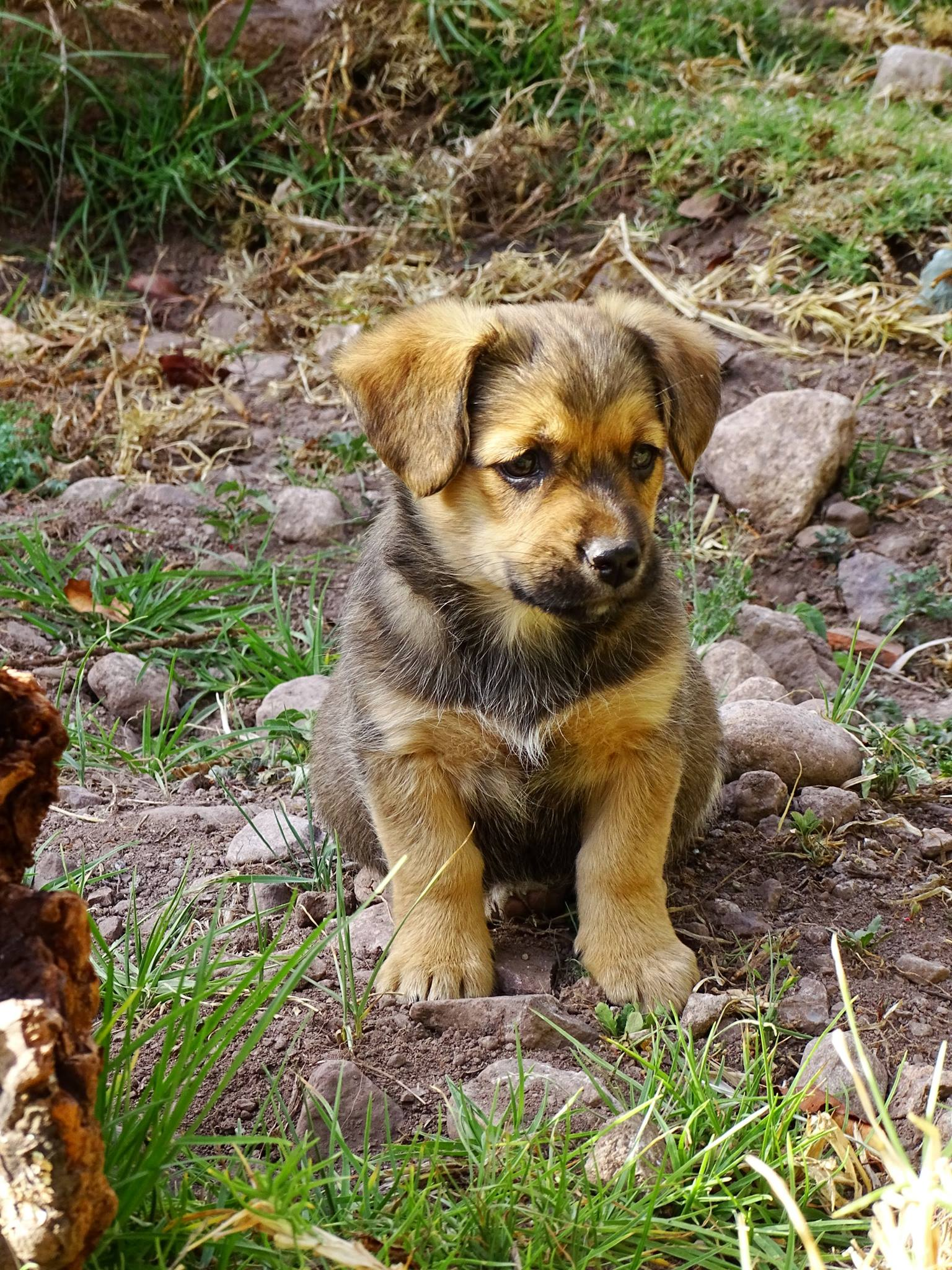 T´ika (Flower in Quechua), the baby girl.