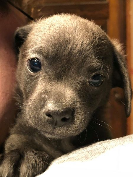 Puppy Woody male.jpg