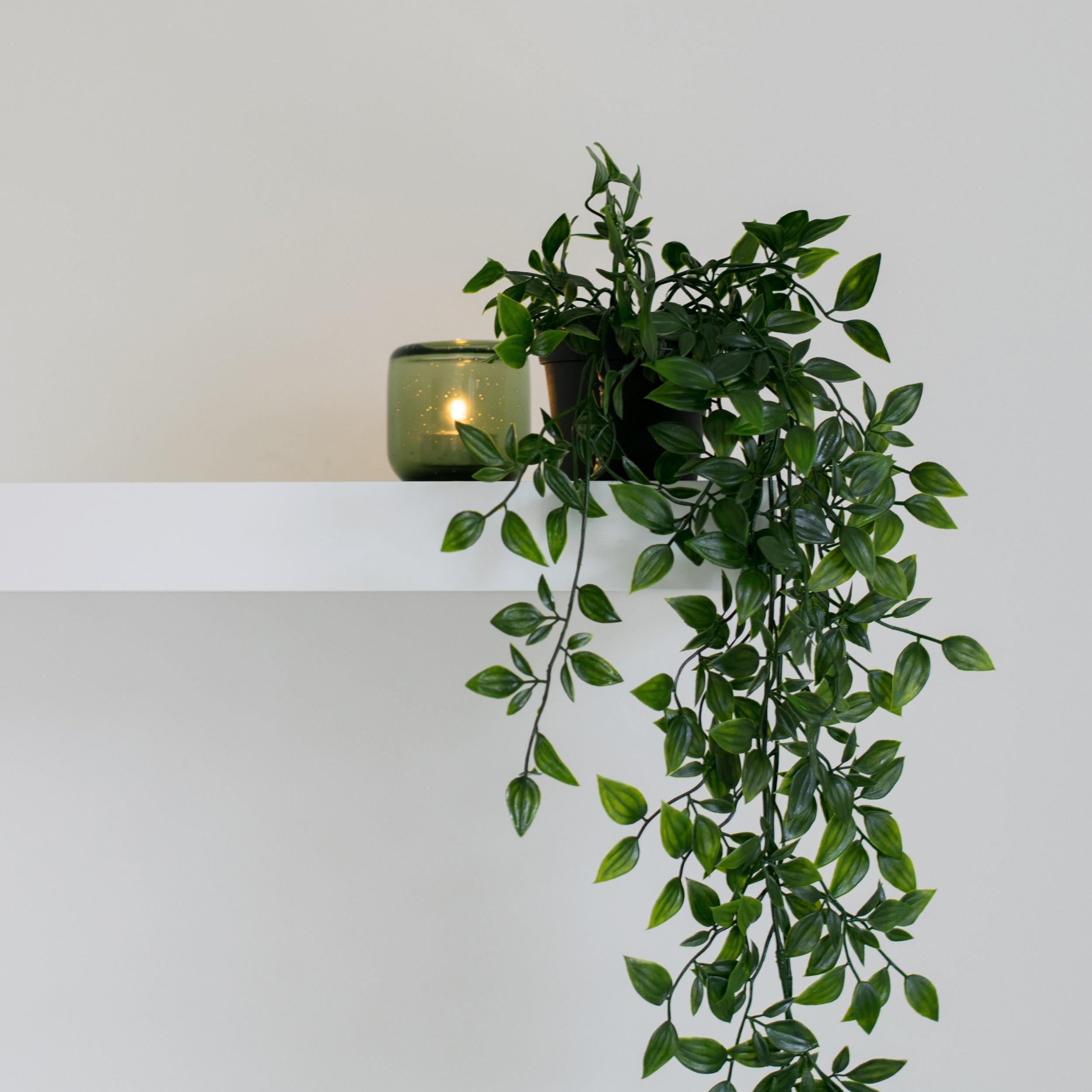 plant hanging.jpg