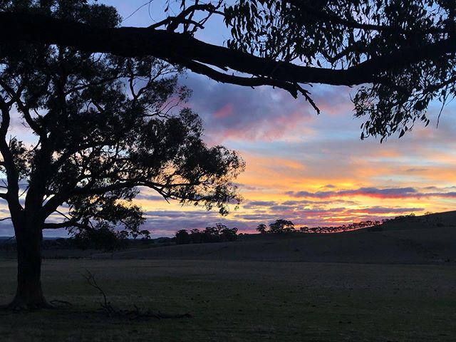 Nice to see a glimmer of green on the paddocks #seasonschange #cloud9farm #cloud9 #cellardoor #winery #wine #winetasting #winelover #winestagram #wineandcheese #cheese #cheeselover #visitvictoria #visitmelbourne #seeaustralia #wandervictoria #melbourne #weekend #weekendvibes #daylesfordmacedonranges #landscapephotography #landscape #country #countryside #farmlife #roomwithaview #view #viewsfordays #autumn