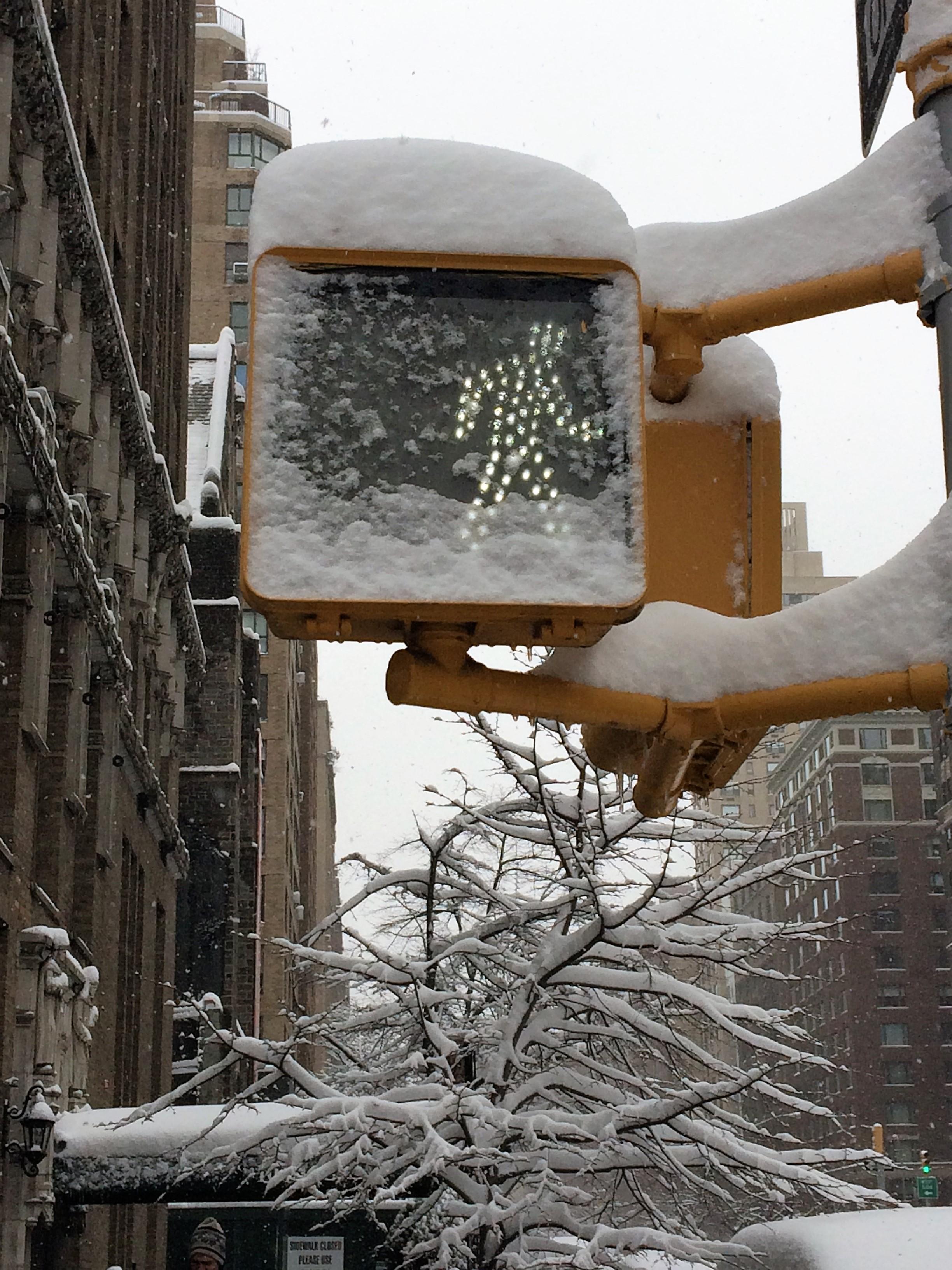 Nature's Handiwork on the Upper East Side