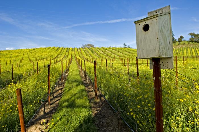 Merryvale-vineyard.jpg