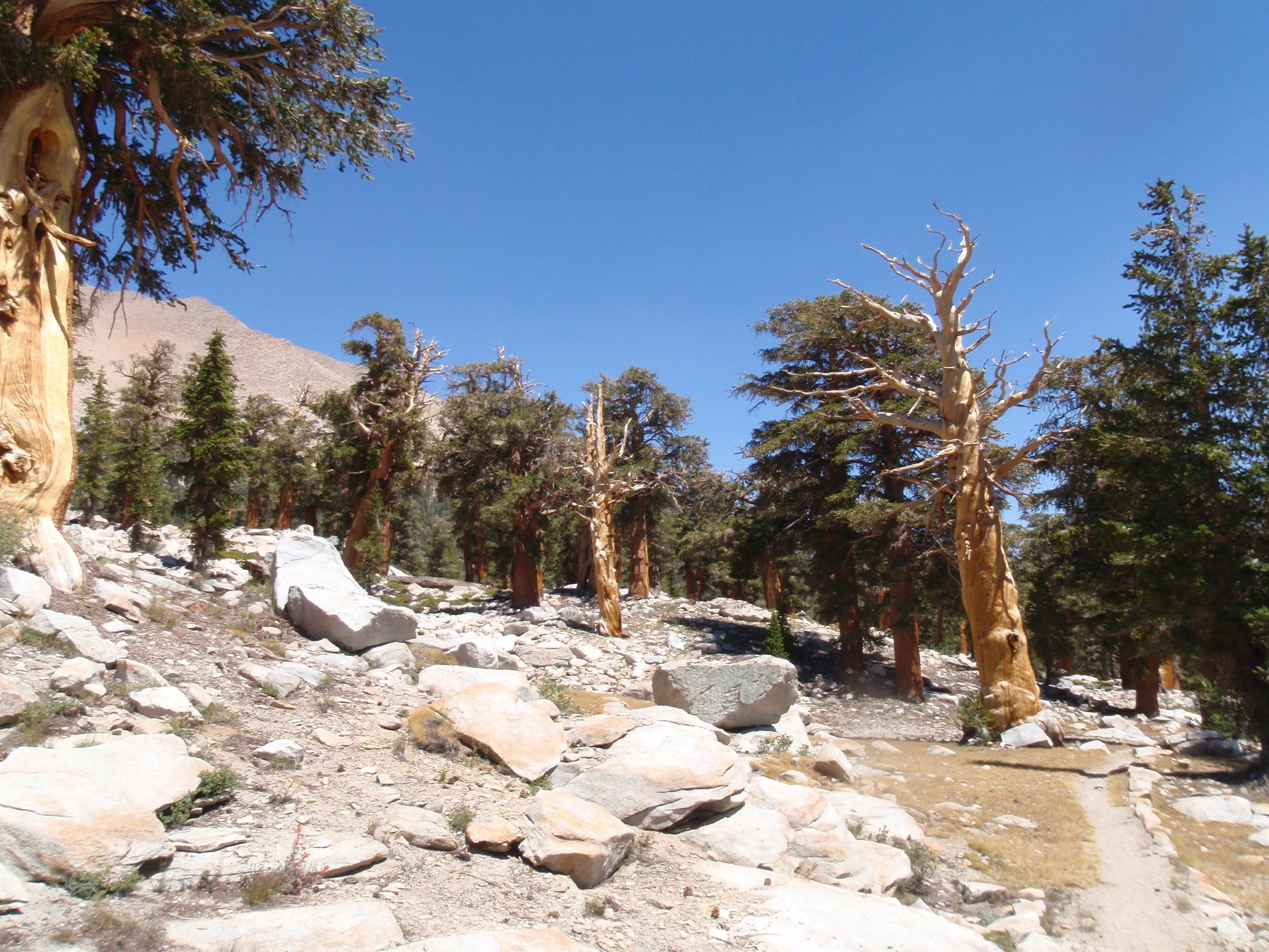 chagoopa-plateau