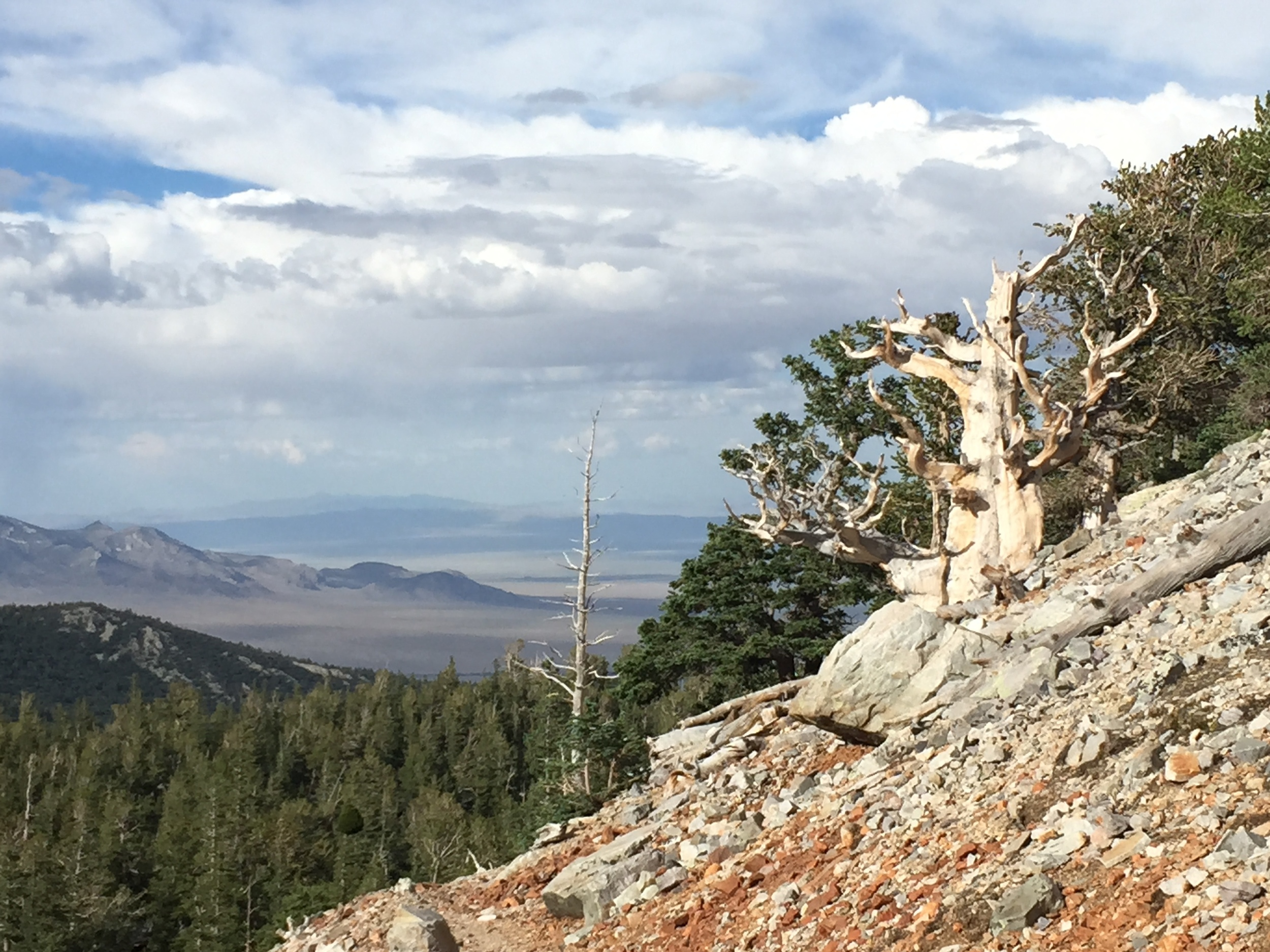 Great Basin N.P. (NV) | July 2015