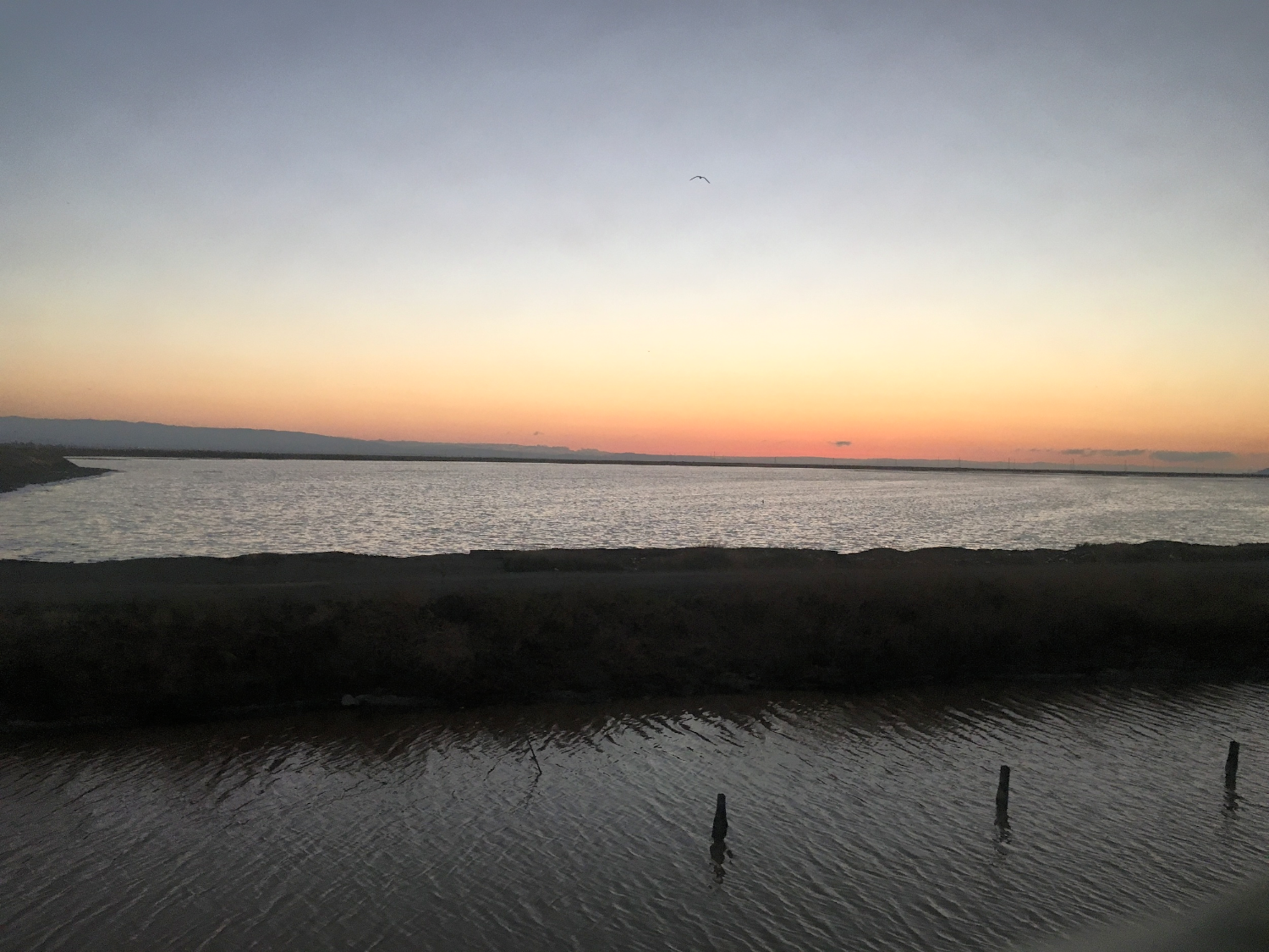 Tidal flats in the South Bay through the train window