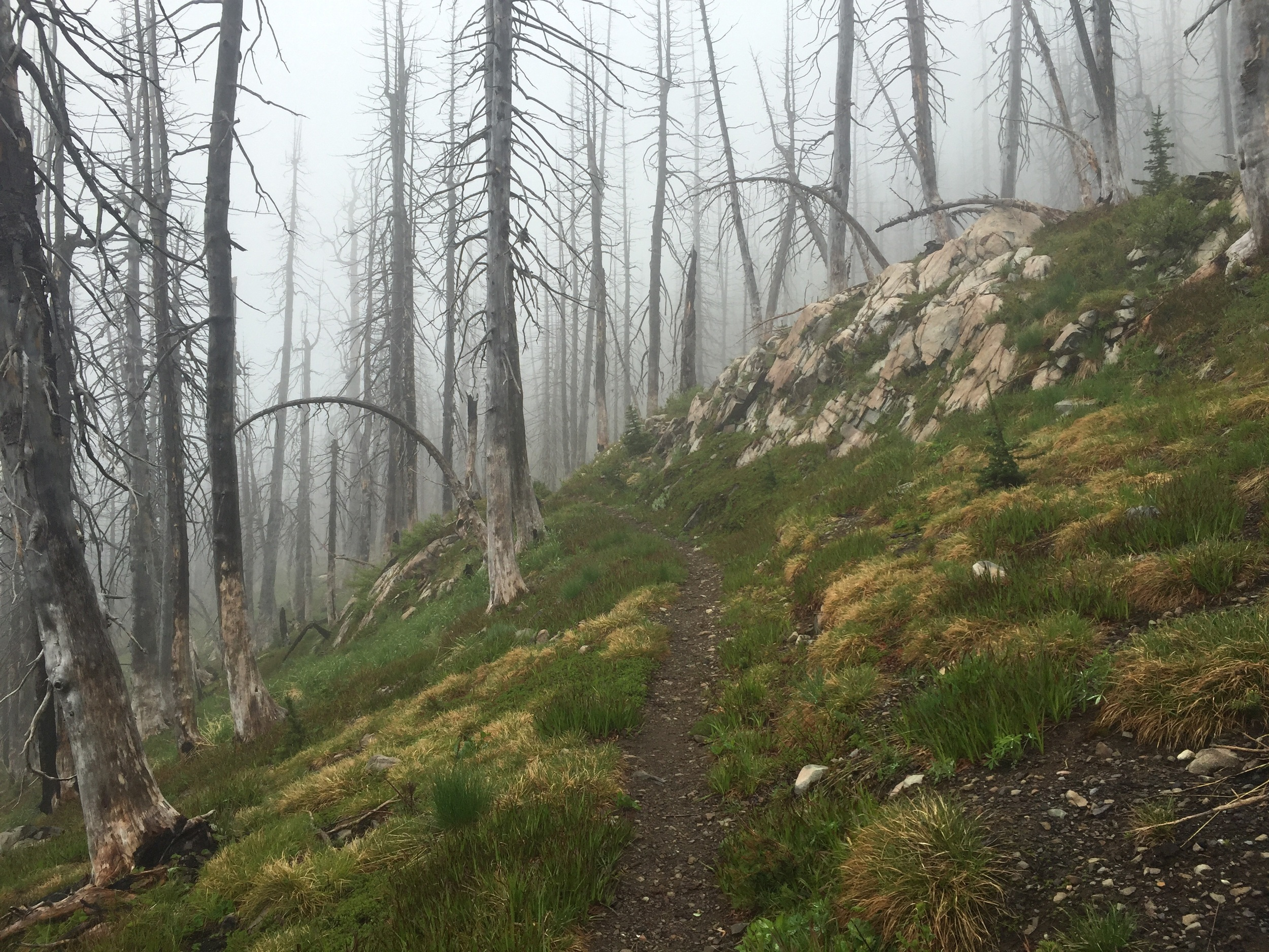 Trail above the burned Meadow campground