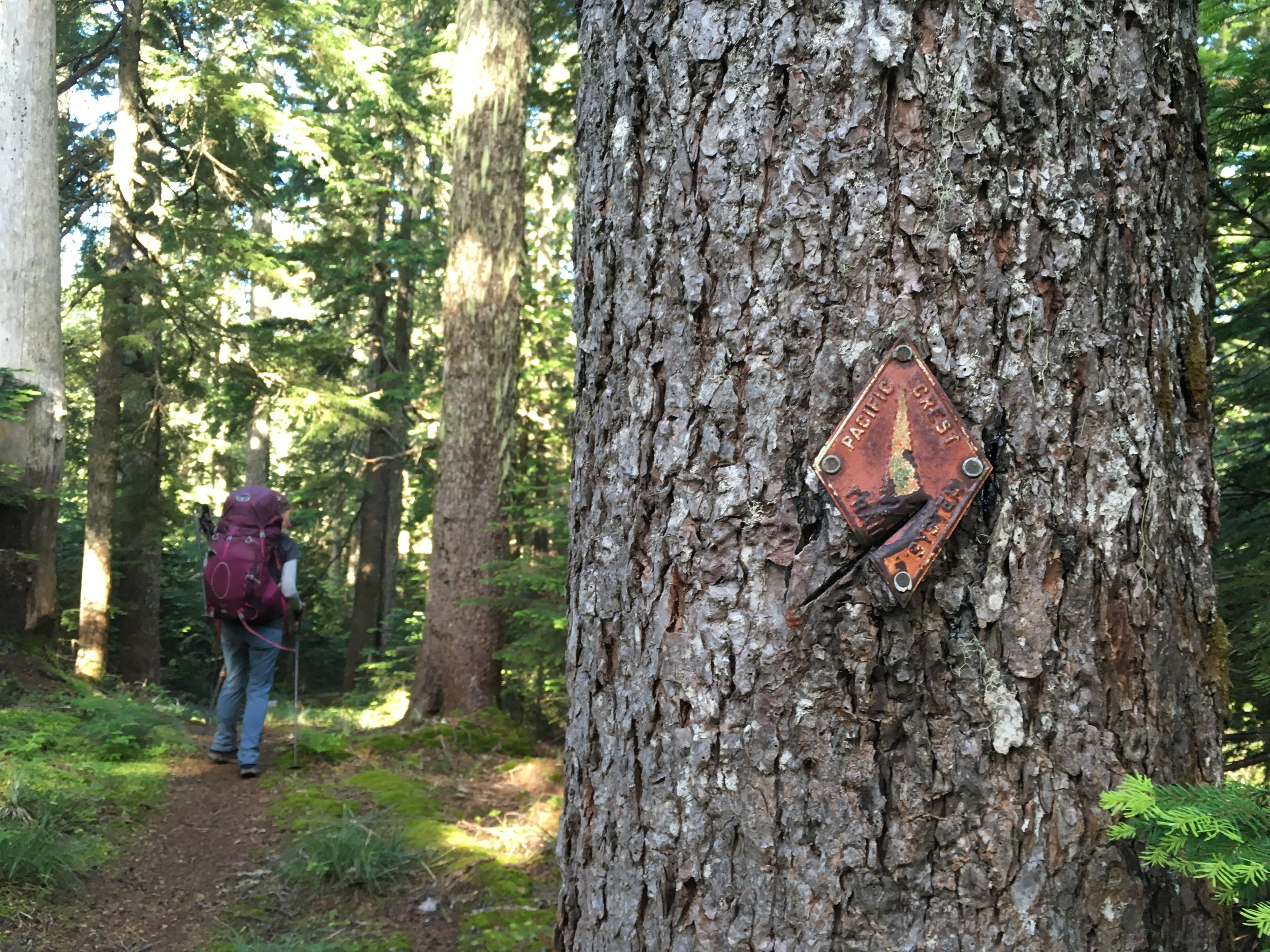 Weathered PCT sign in the forest.