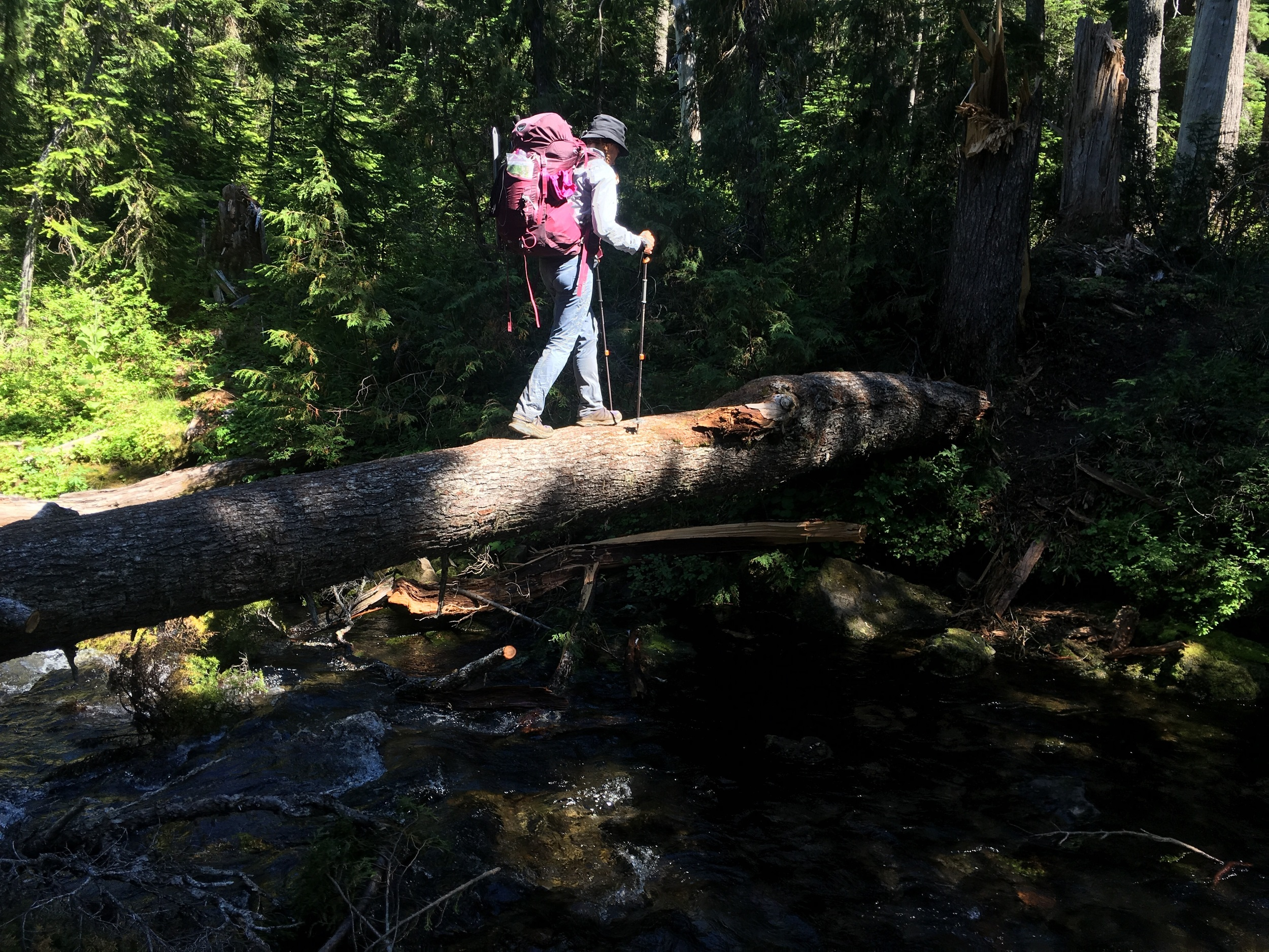 Huckleberry crossing the log to avoid the ford of Bumping Creek