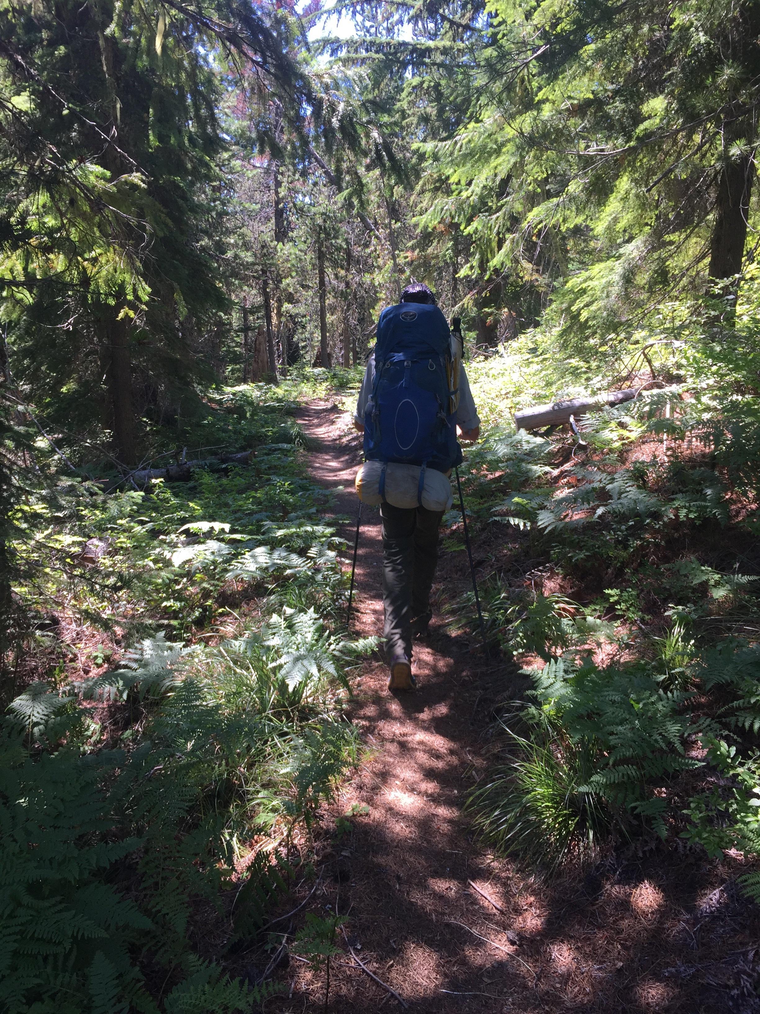 Plenty of shady forest walking today