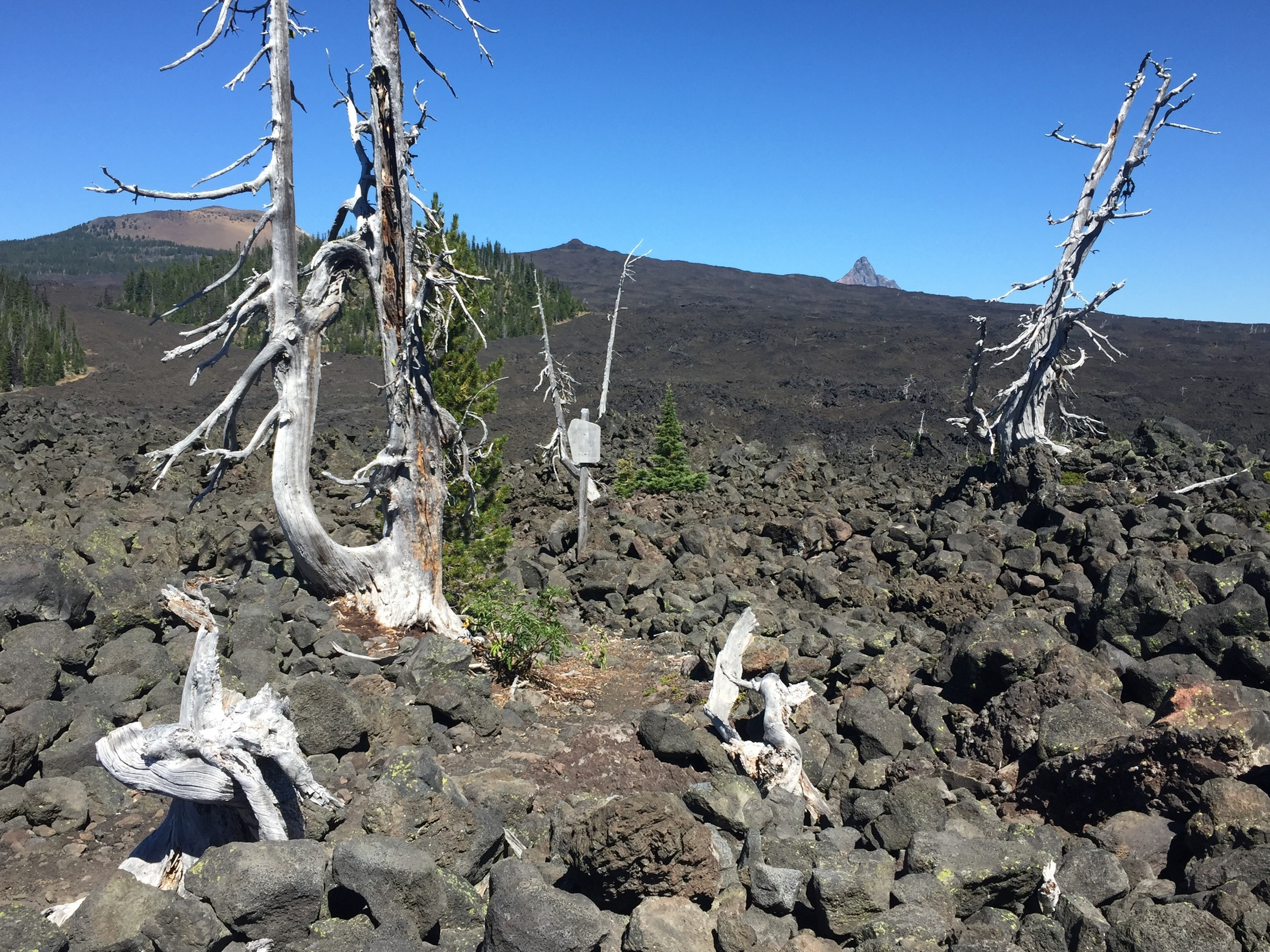A peek back at Belknap Crater (L) & Mt Washington (R) from the wilderness boundary near Hwy 242 at Mackenzie Pass