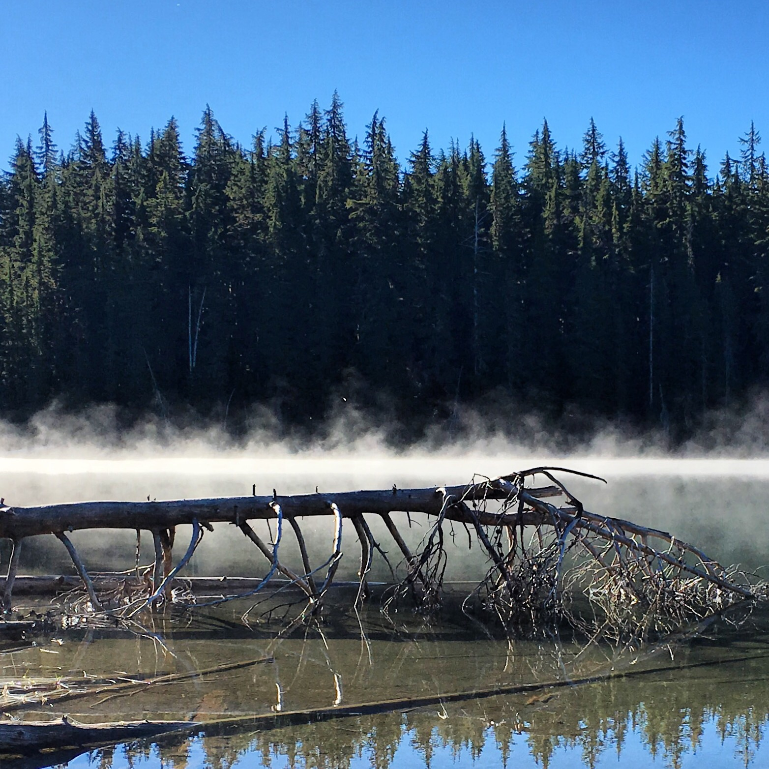 Morning steam fog on one of many scenic little lakes
