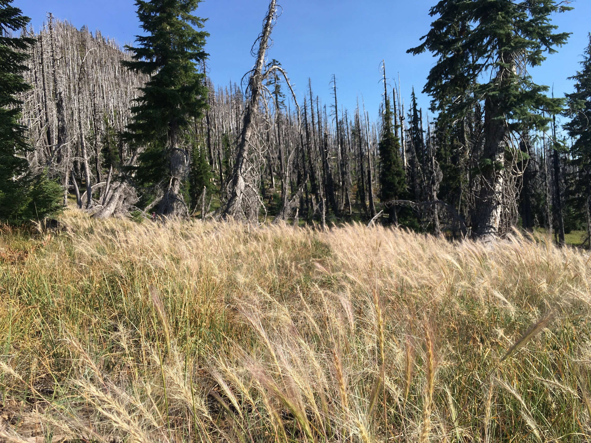Dry grasses bowing to the breeze amongst the ghosts.