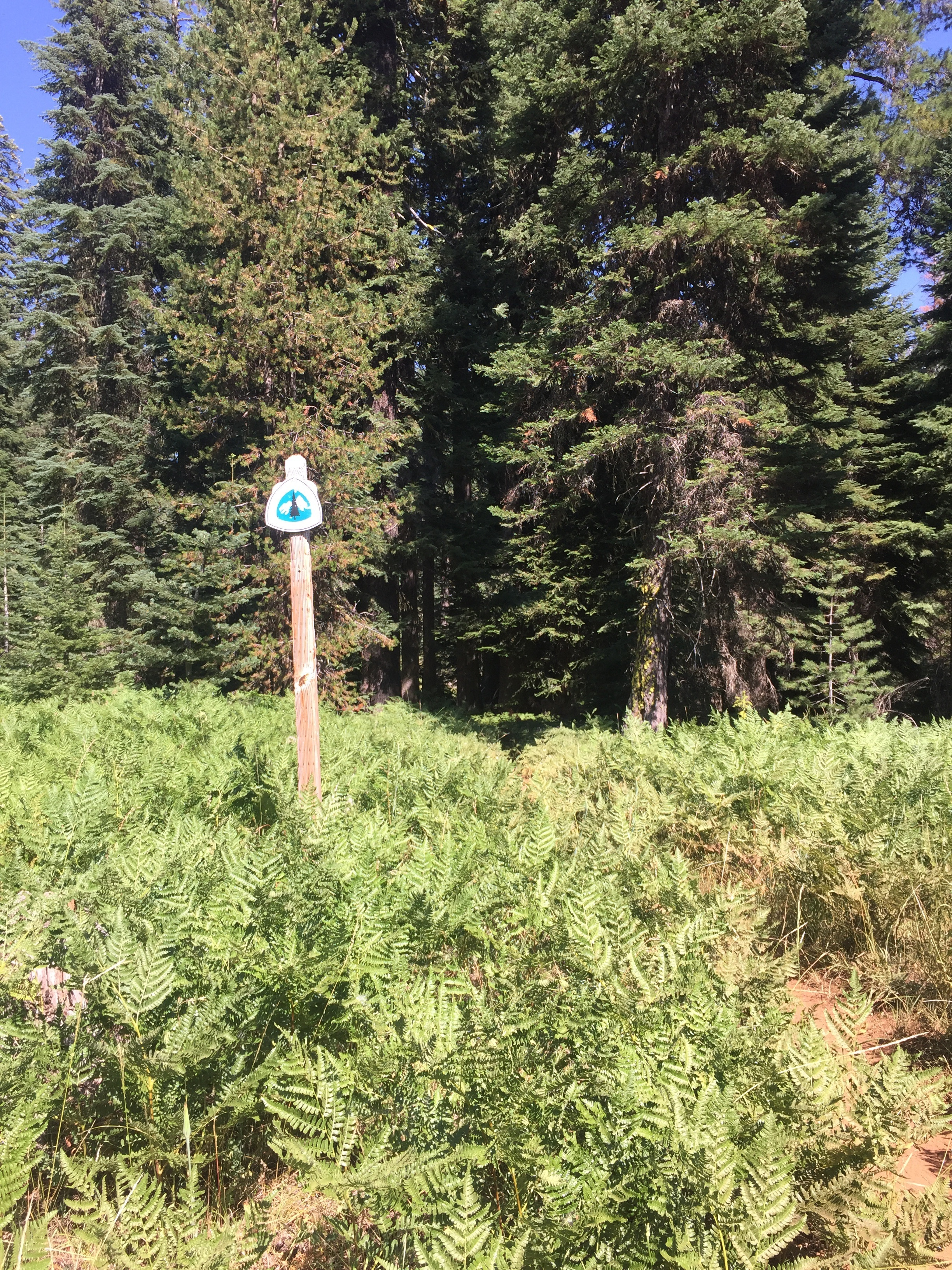 PCT signs on BLM land are pretty huge