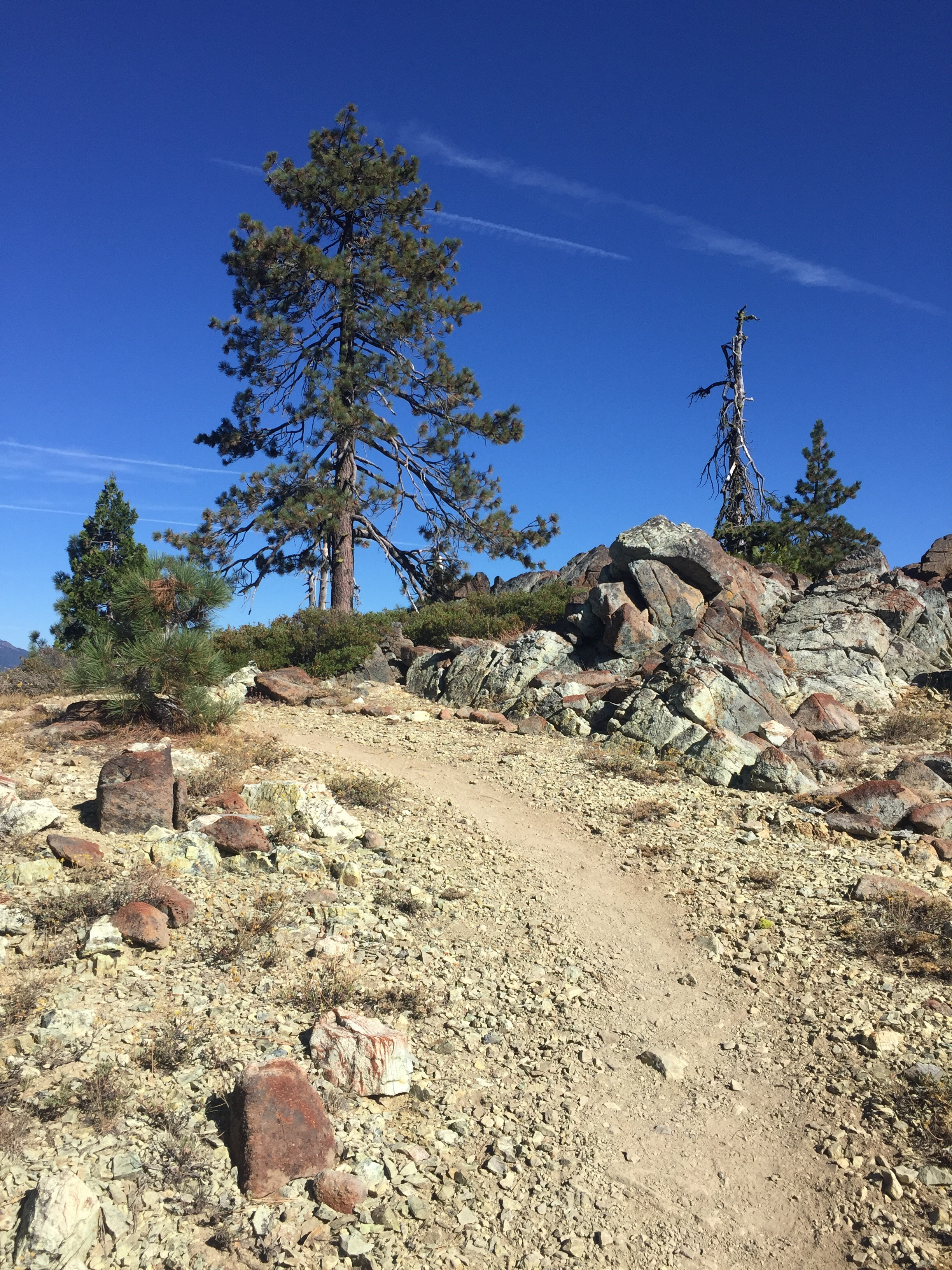 Dry, sure, but dramatic too. The trail climbs after leaving Hwy 3 at Scott Mountain Summit. Tall Jeffrey Pine ahead.