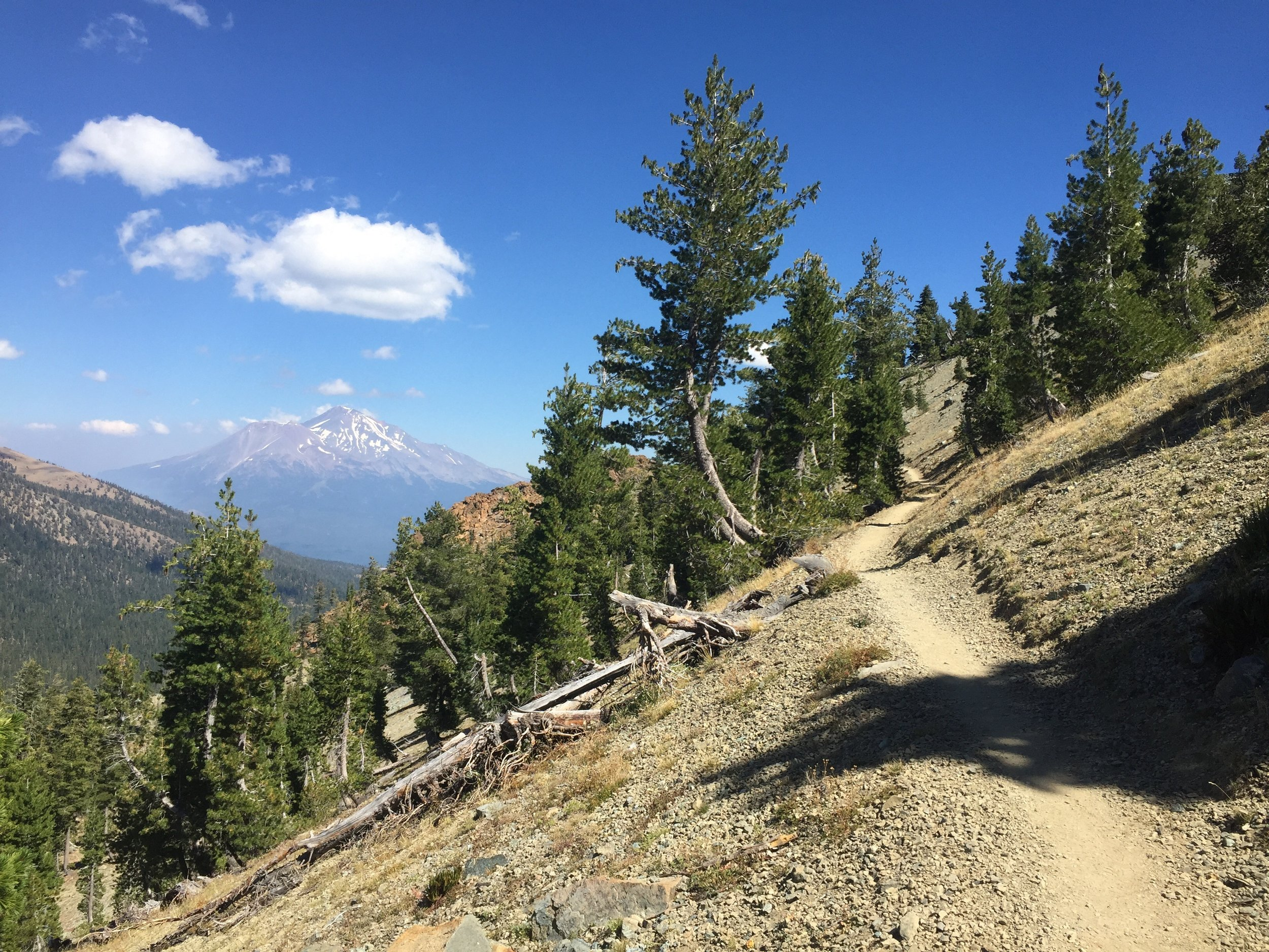 Mt. Shasta dominates the views from this high basin whose slopes are dotted by northern Foxtail and Whitebark pines