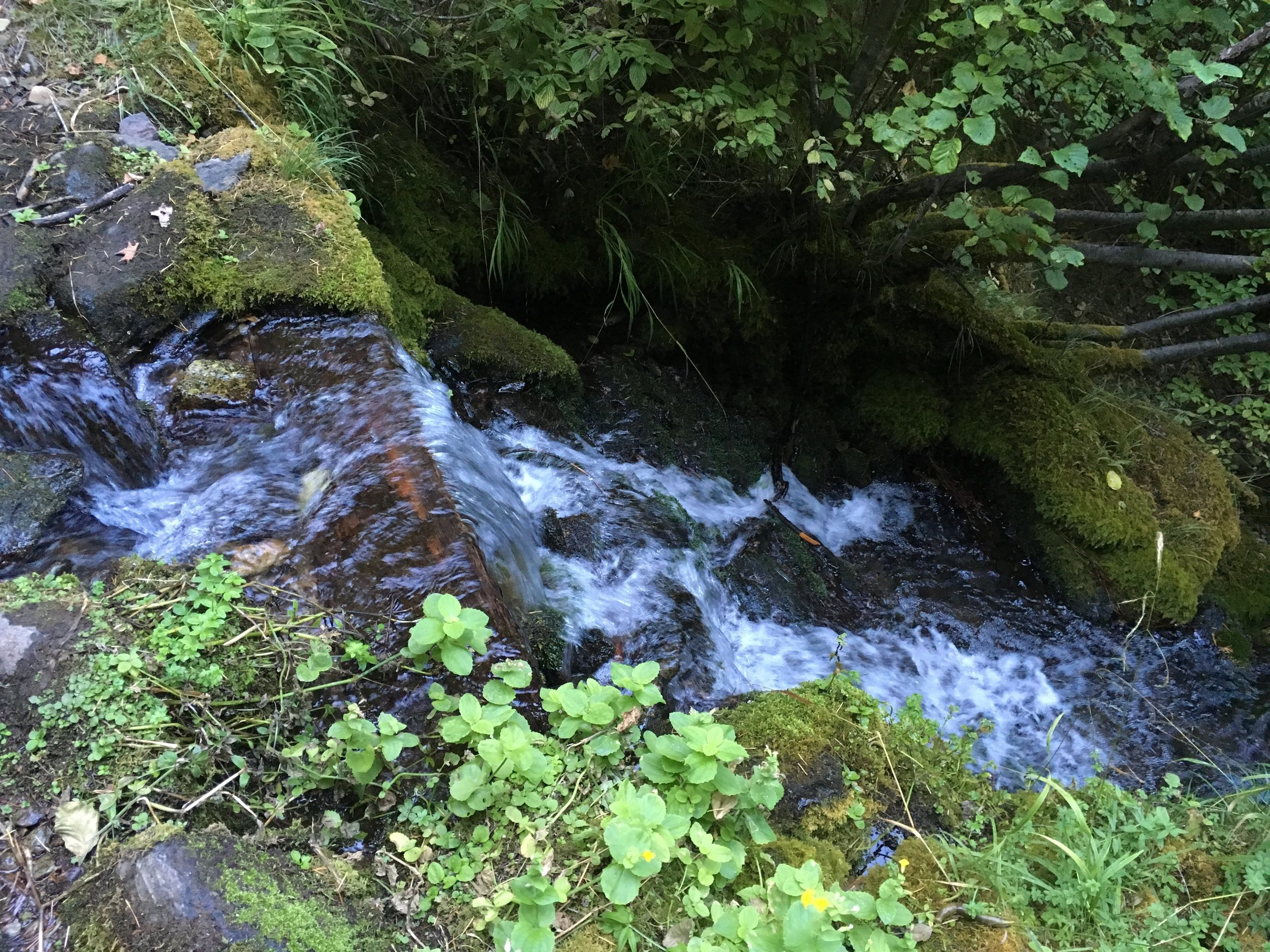 One of the numerous side creeks along the trail to the middle fork.