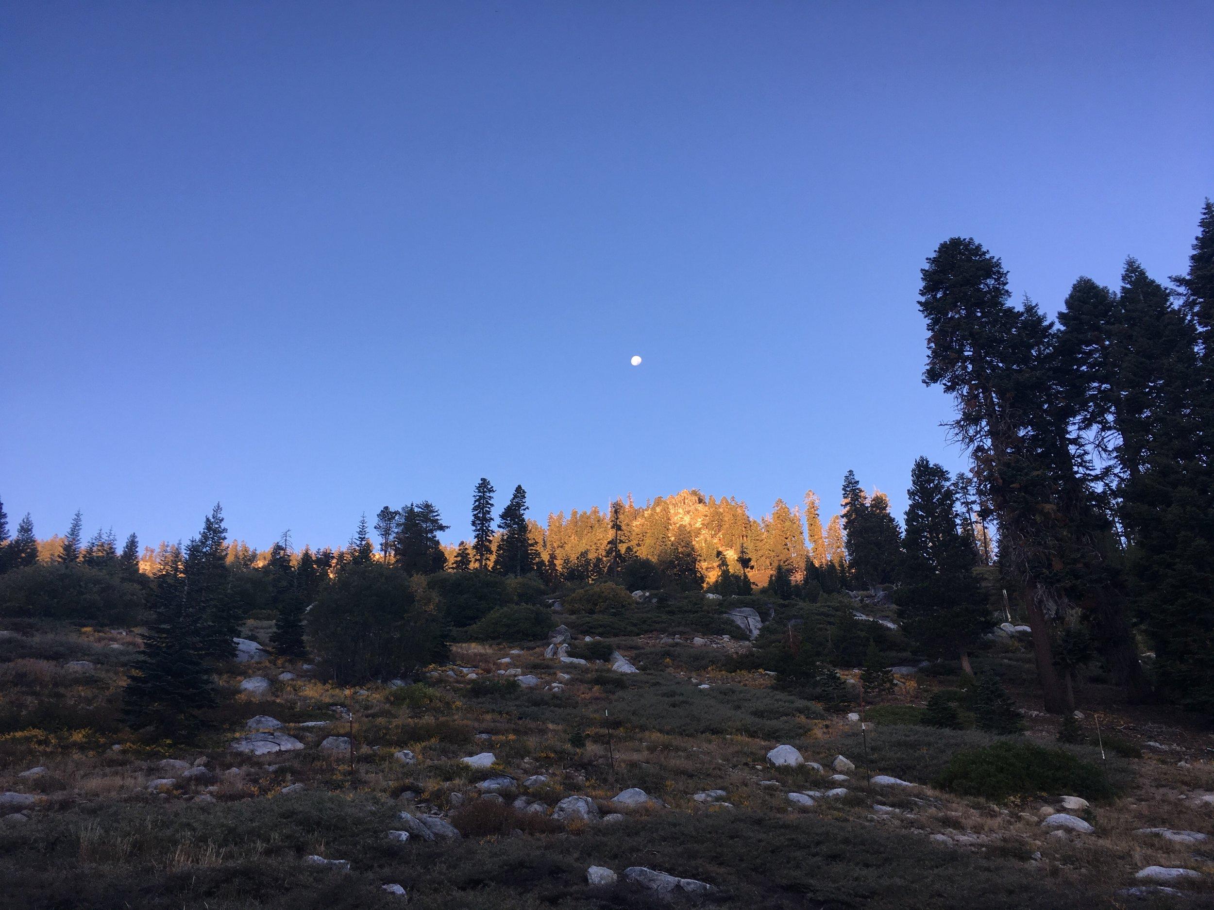 Morning light near Echo Summit with a nearly full moon.