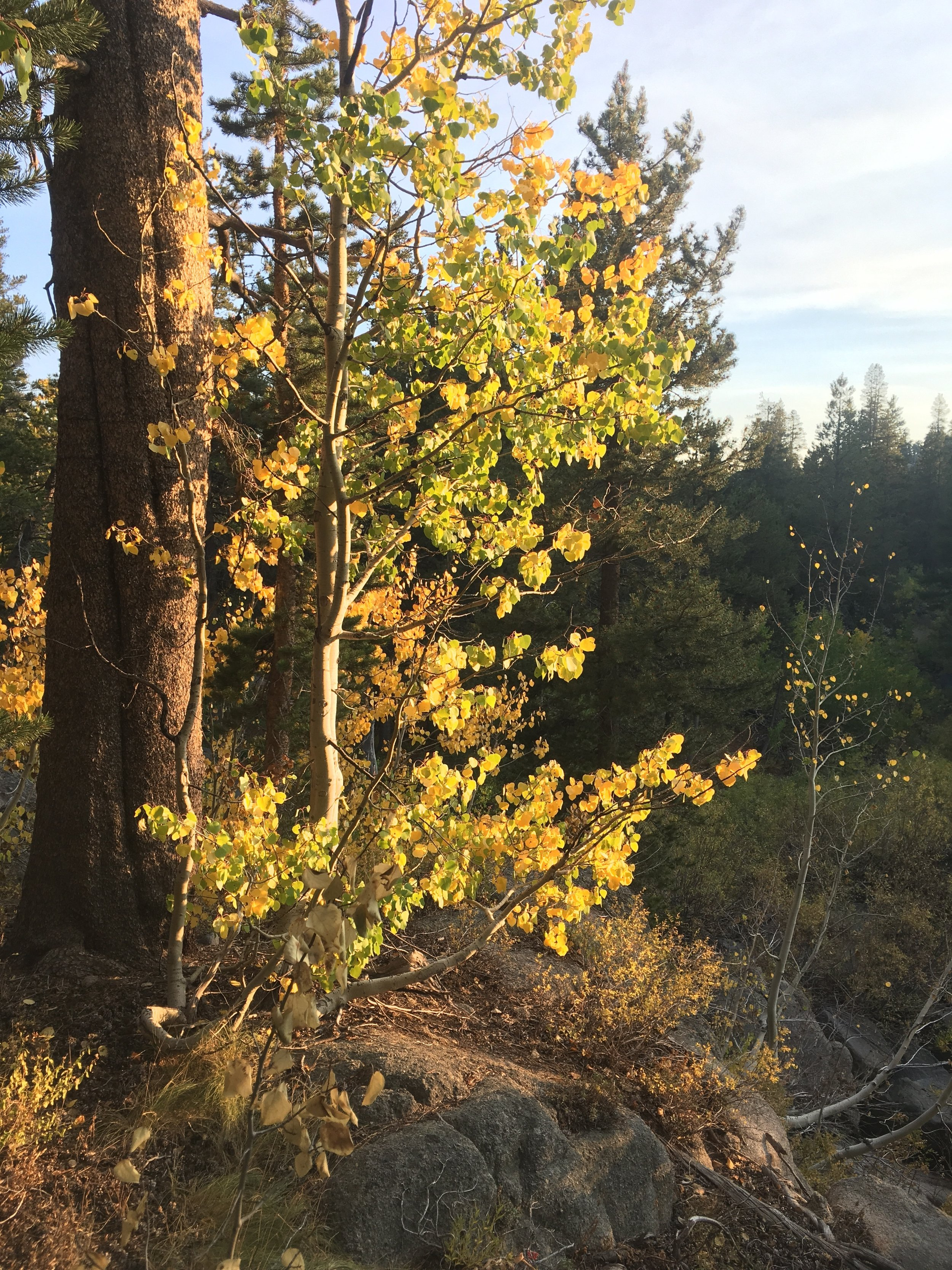 Golden hour light and the changing aspens.