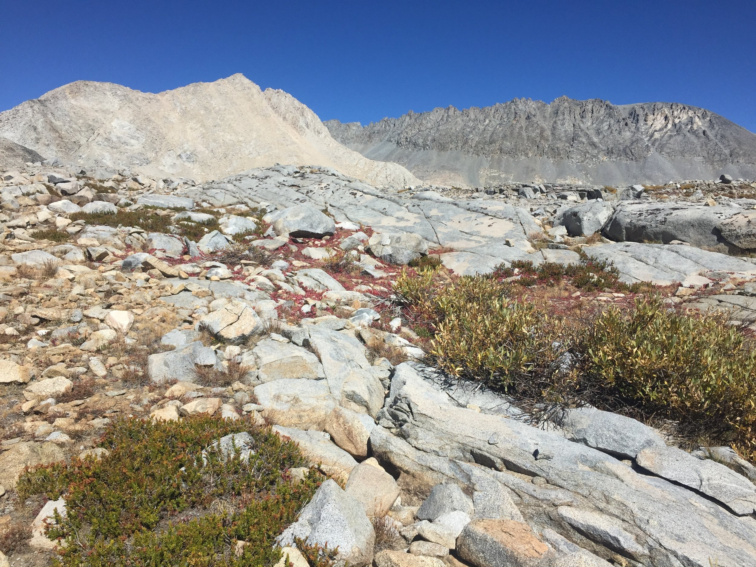Above tree line in Upper Basin, south of Mather Pass